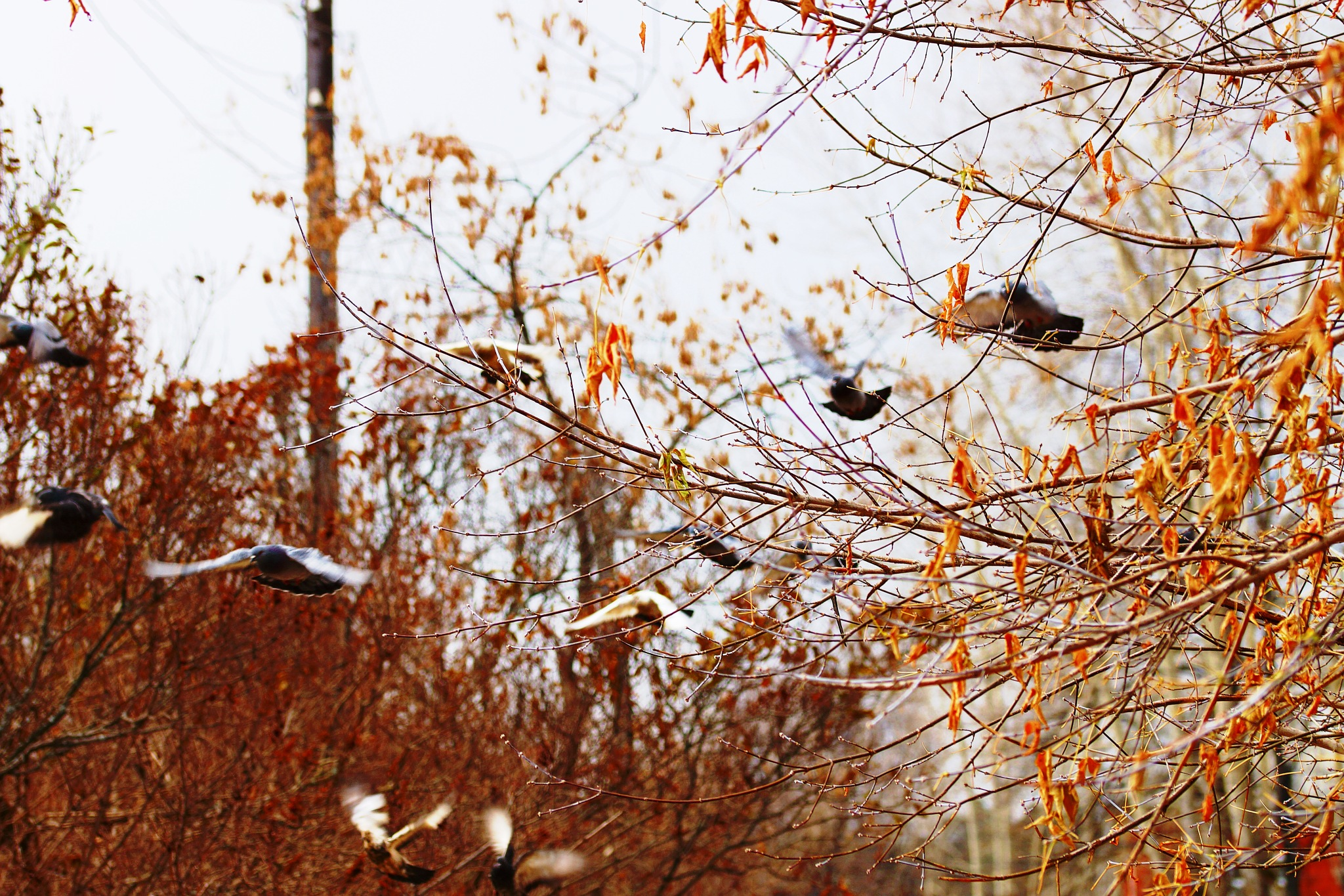 Autumn movements  by sergey.parfeniuk