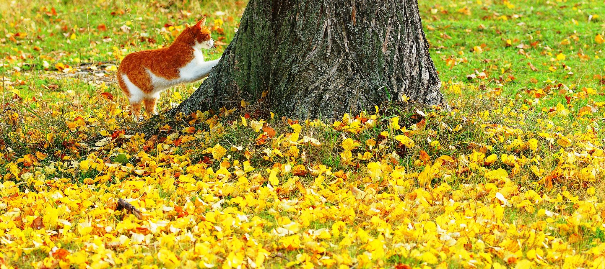 Leaf fall by sergey.parfeniuk