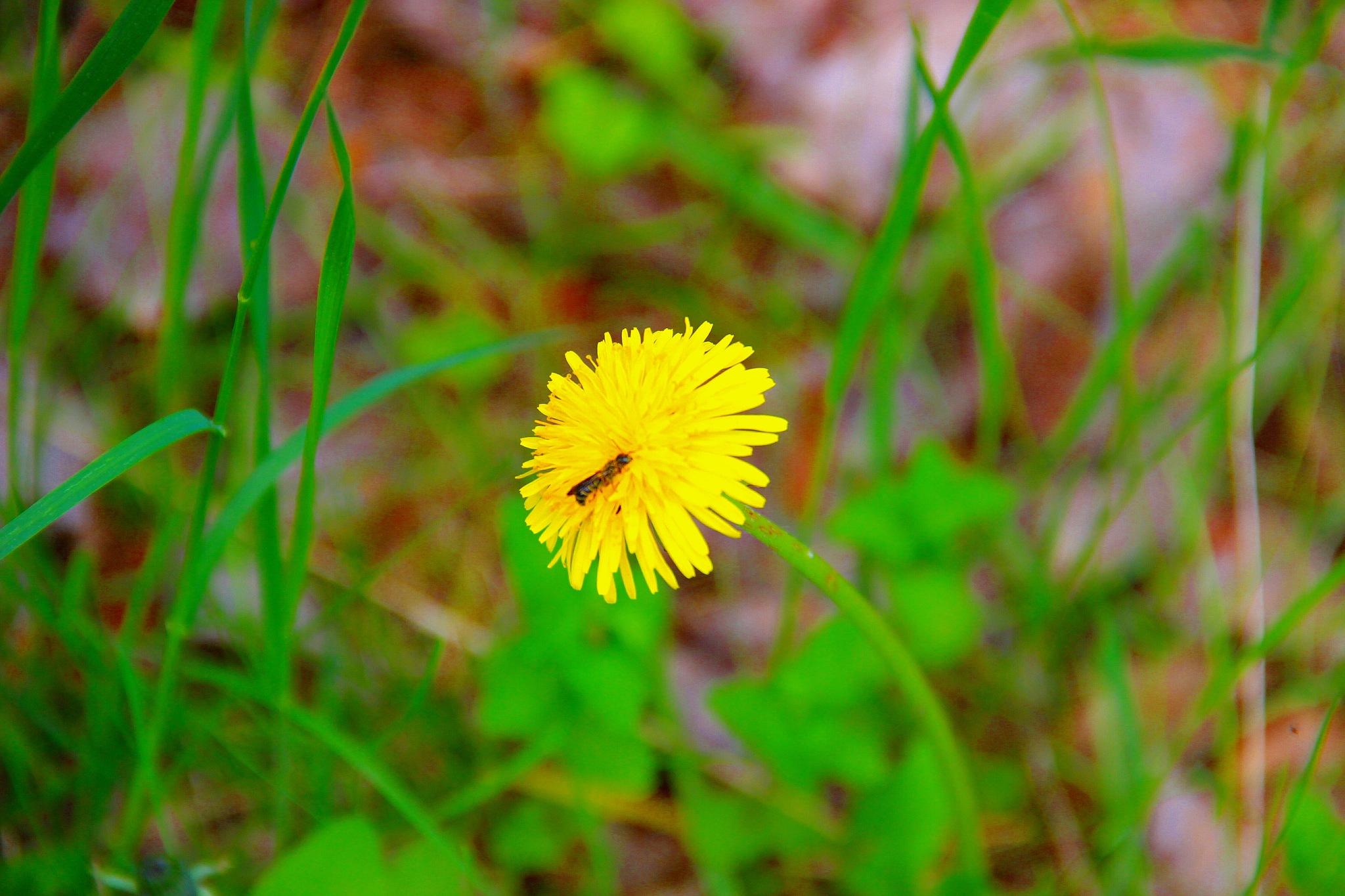 In the Flower by sergey.parfeniuk