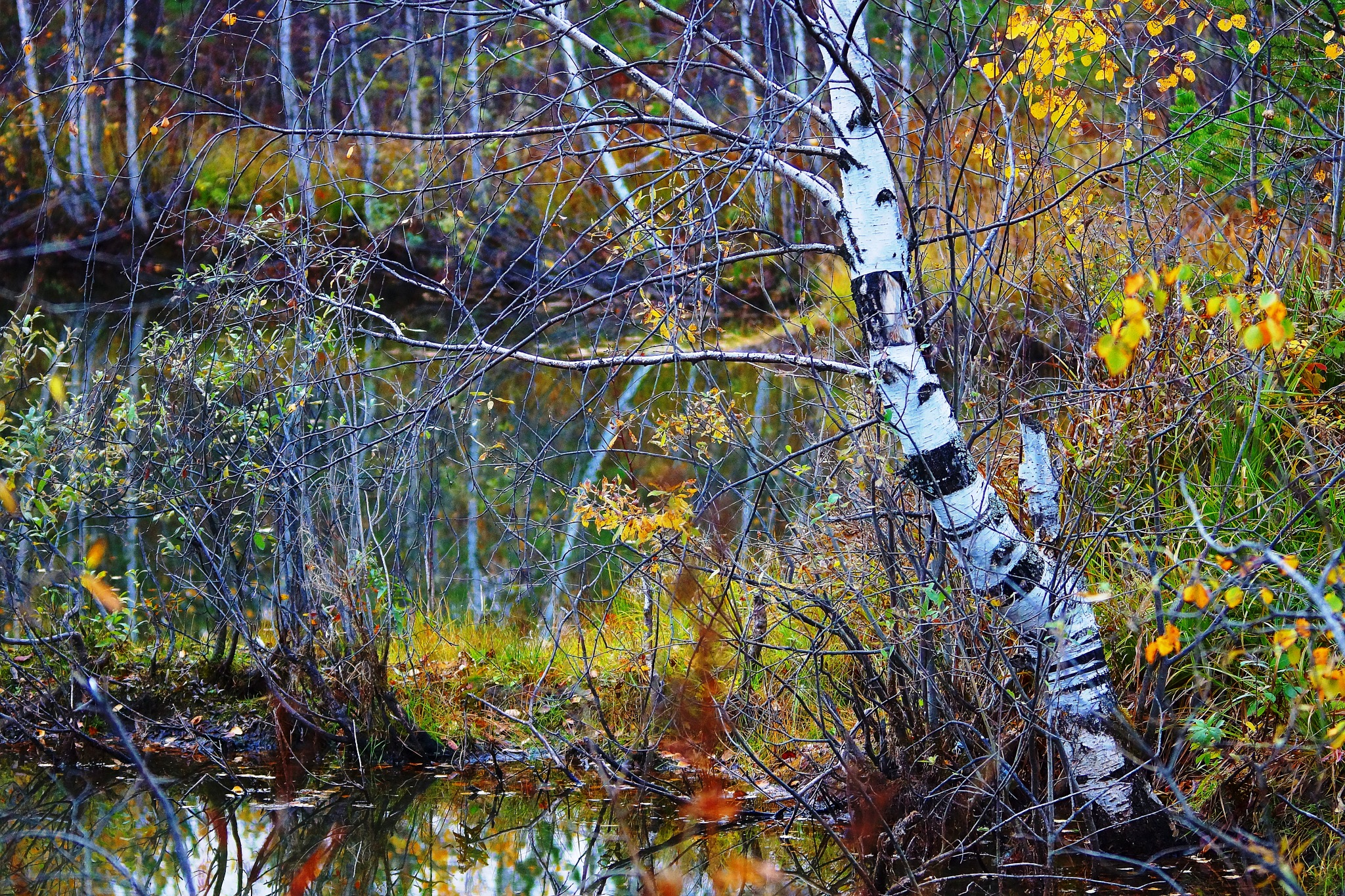 Picturesque reflections by sergey.parfeniuk