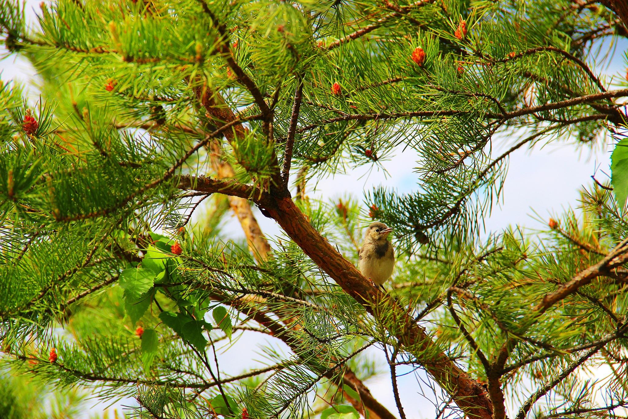 Baby bird by sergey.parfeniuk