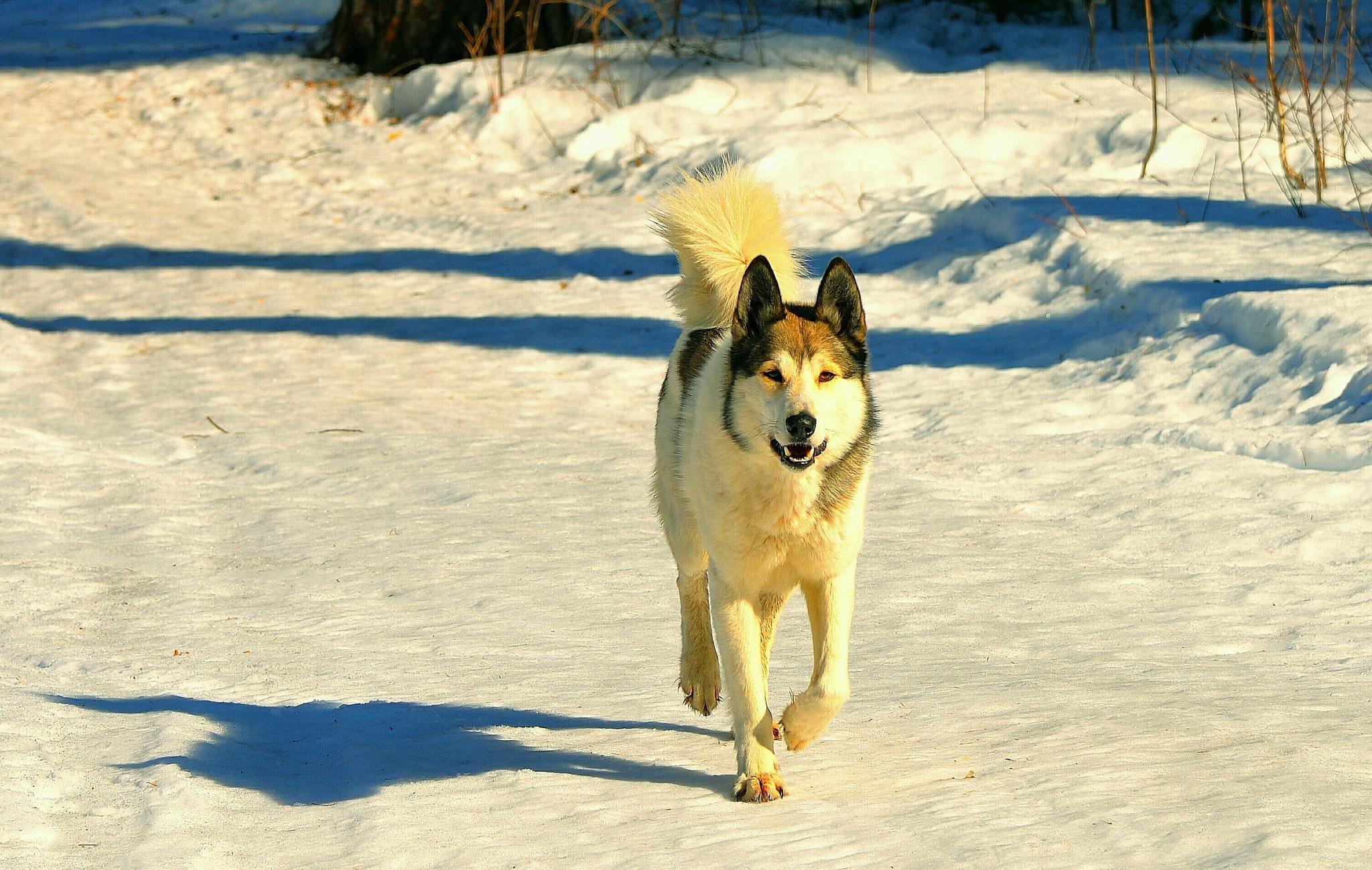 Nice Dog  by sergey.parfeniuk