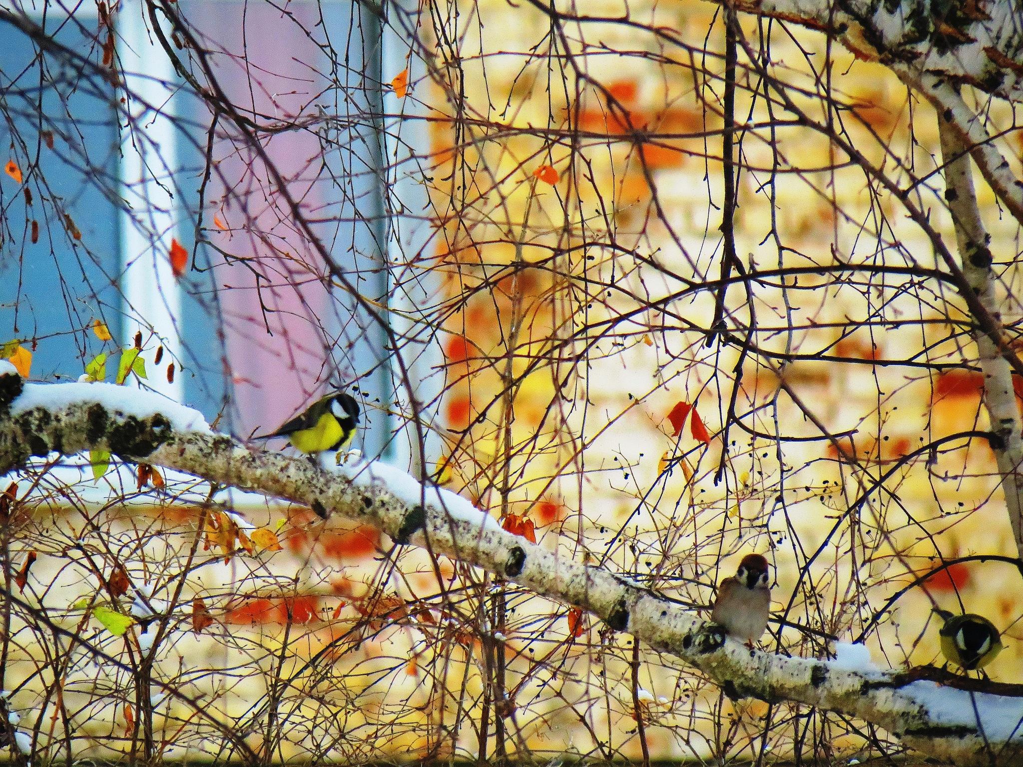 Birdies by sergey.parfeniuk