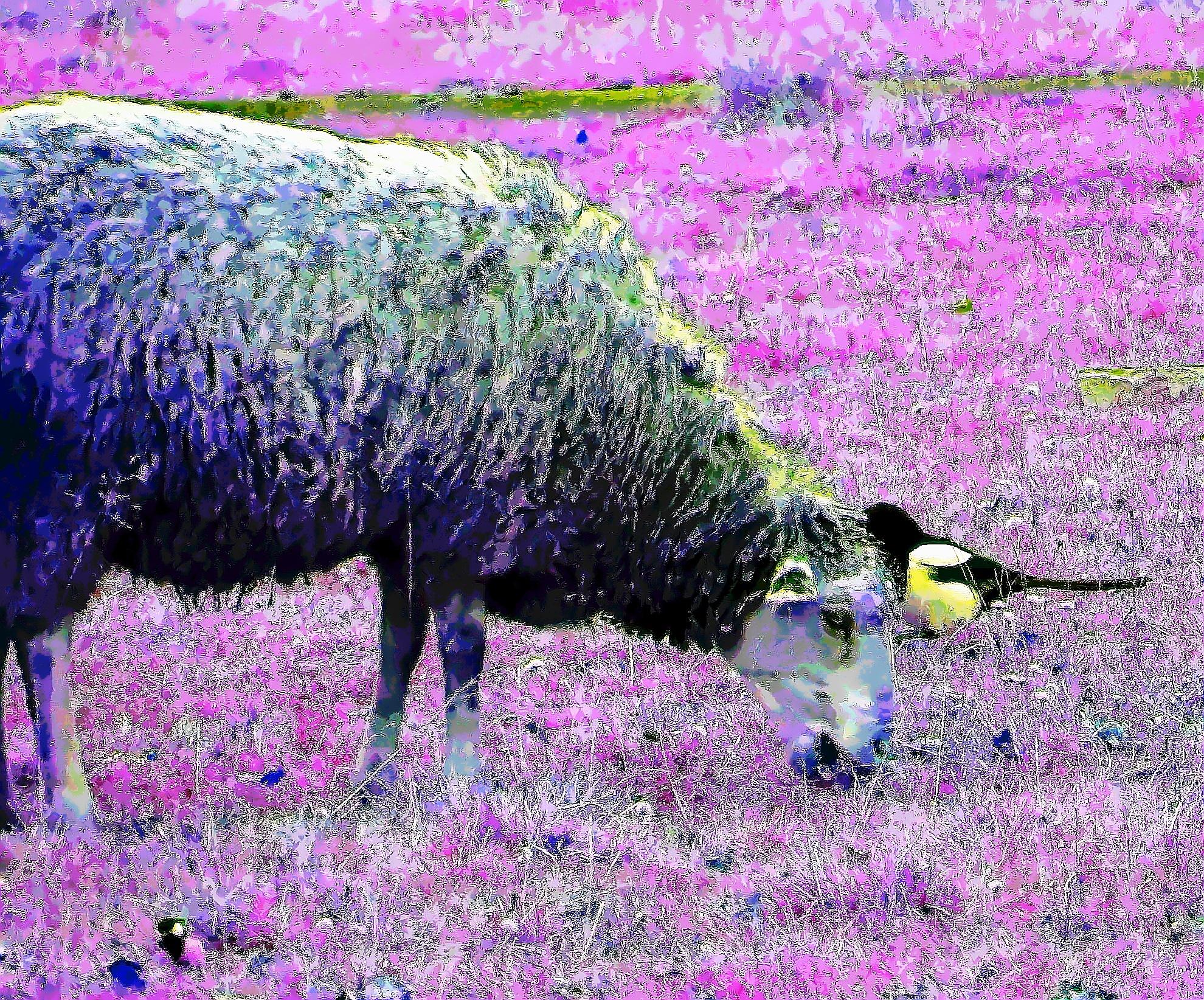 Sheep and Birds by sergey.parfeniuk