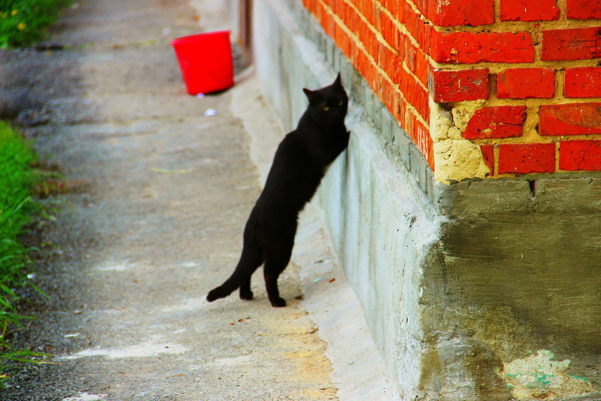 Black cat by sergey.parfeniuk