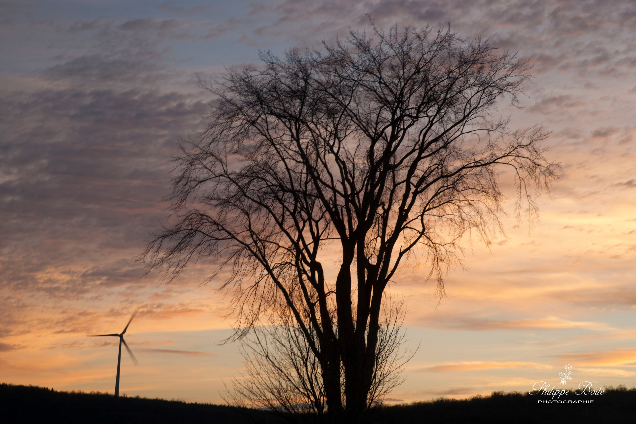 Sunset behind a tree by Philippe Boite
