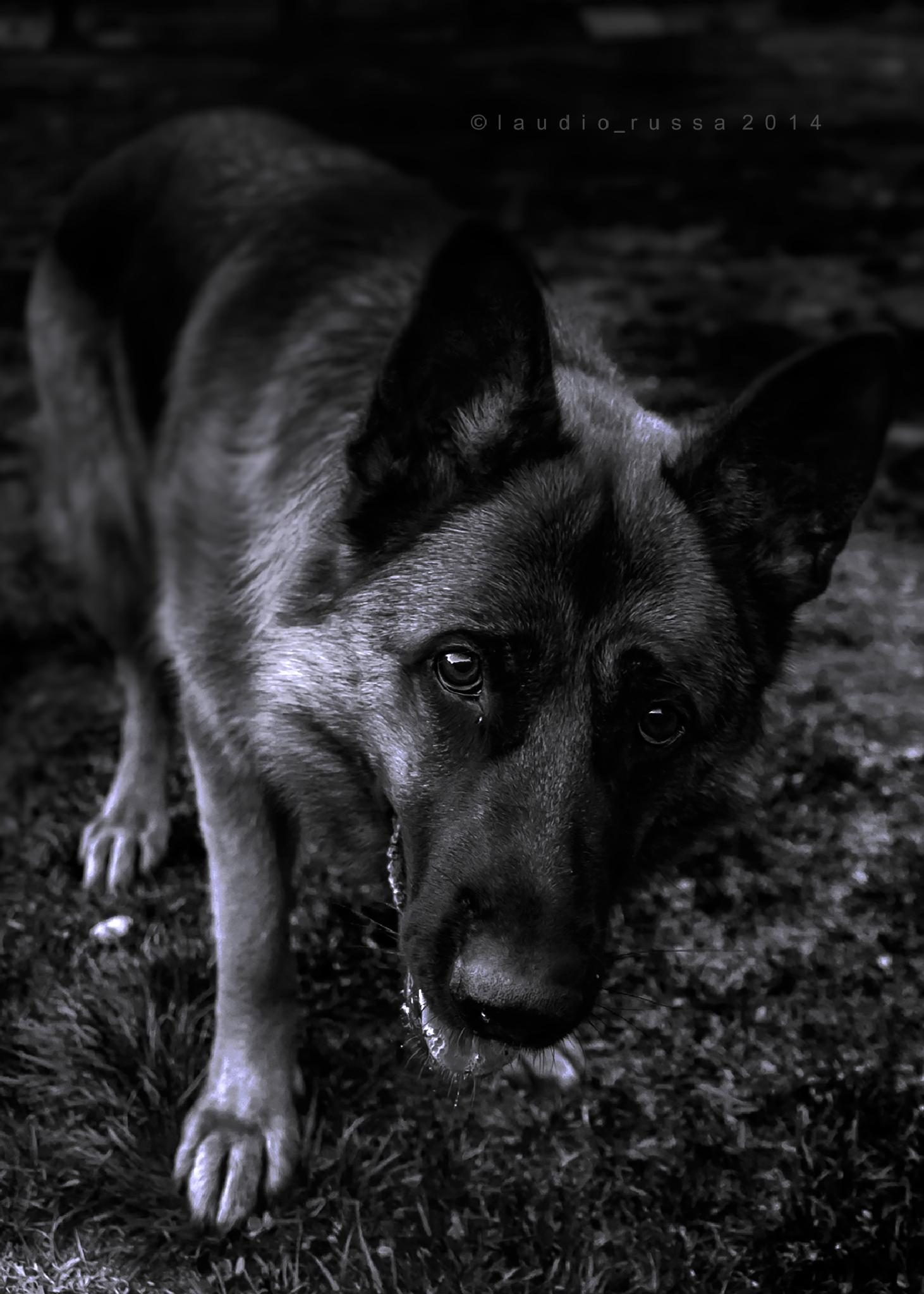 Photo in Animal #dog #black #white