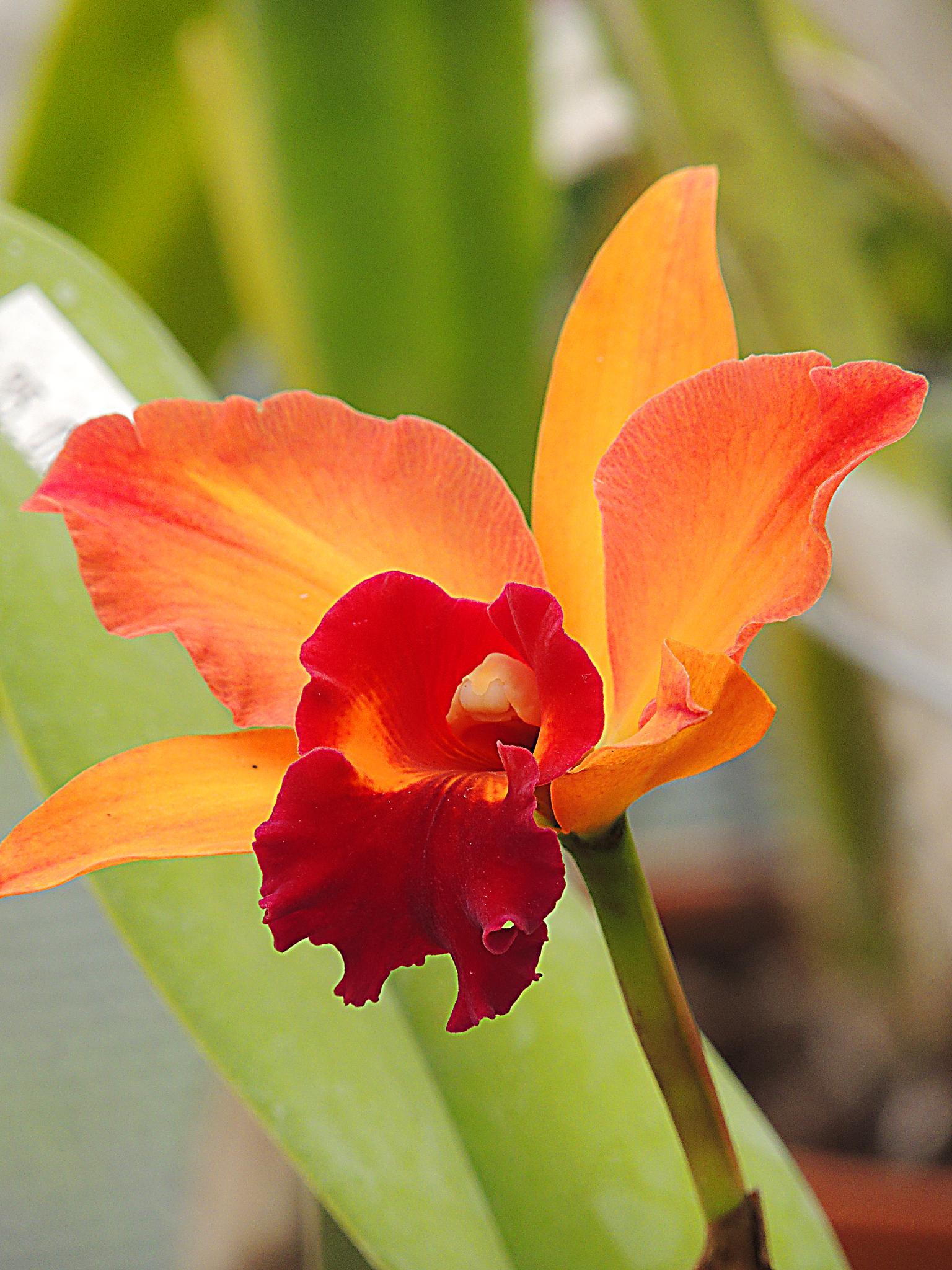Orange and garnet beauty. by pamjessiman