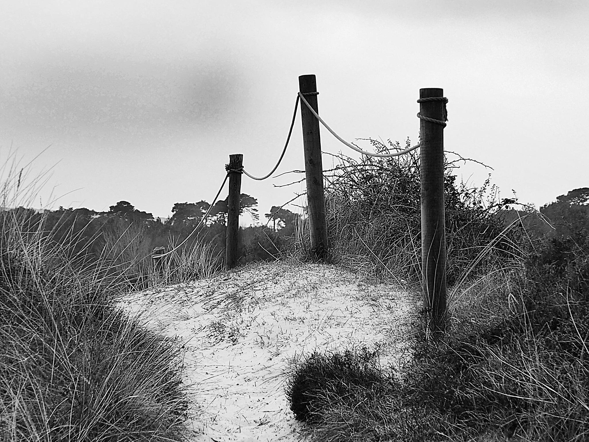 path through the dunes by james arthur