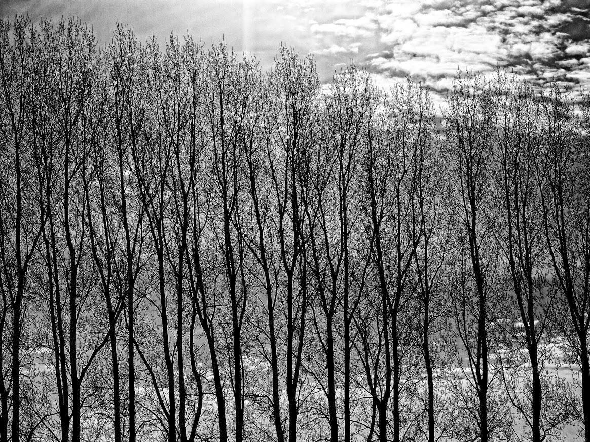 tree line by james arthur