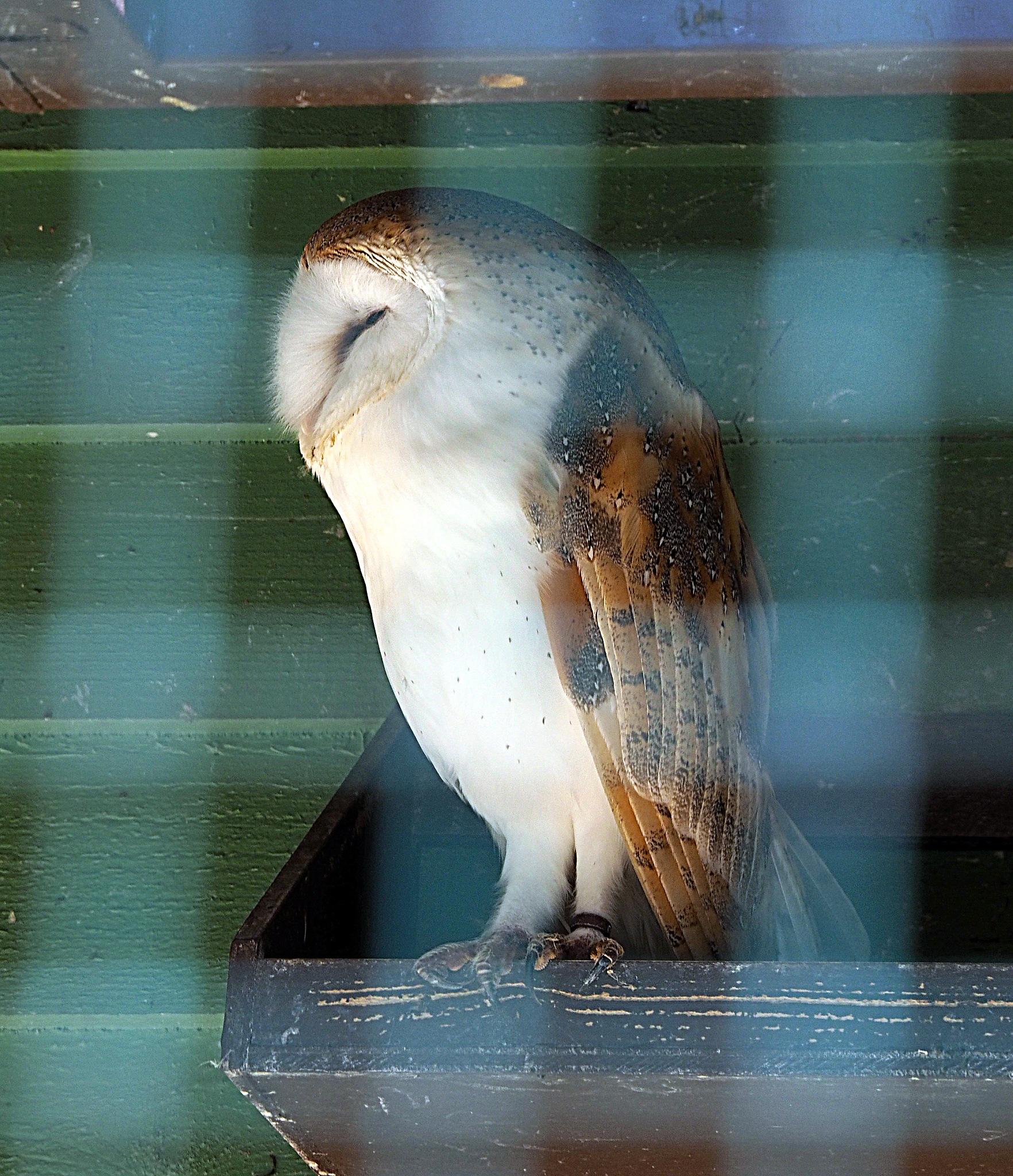 owl 1 by james arthur