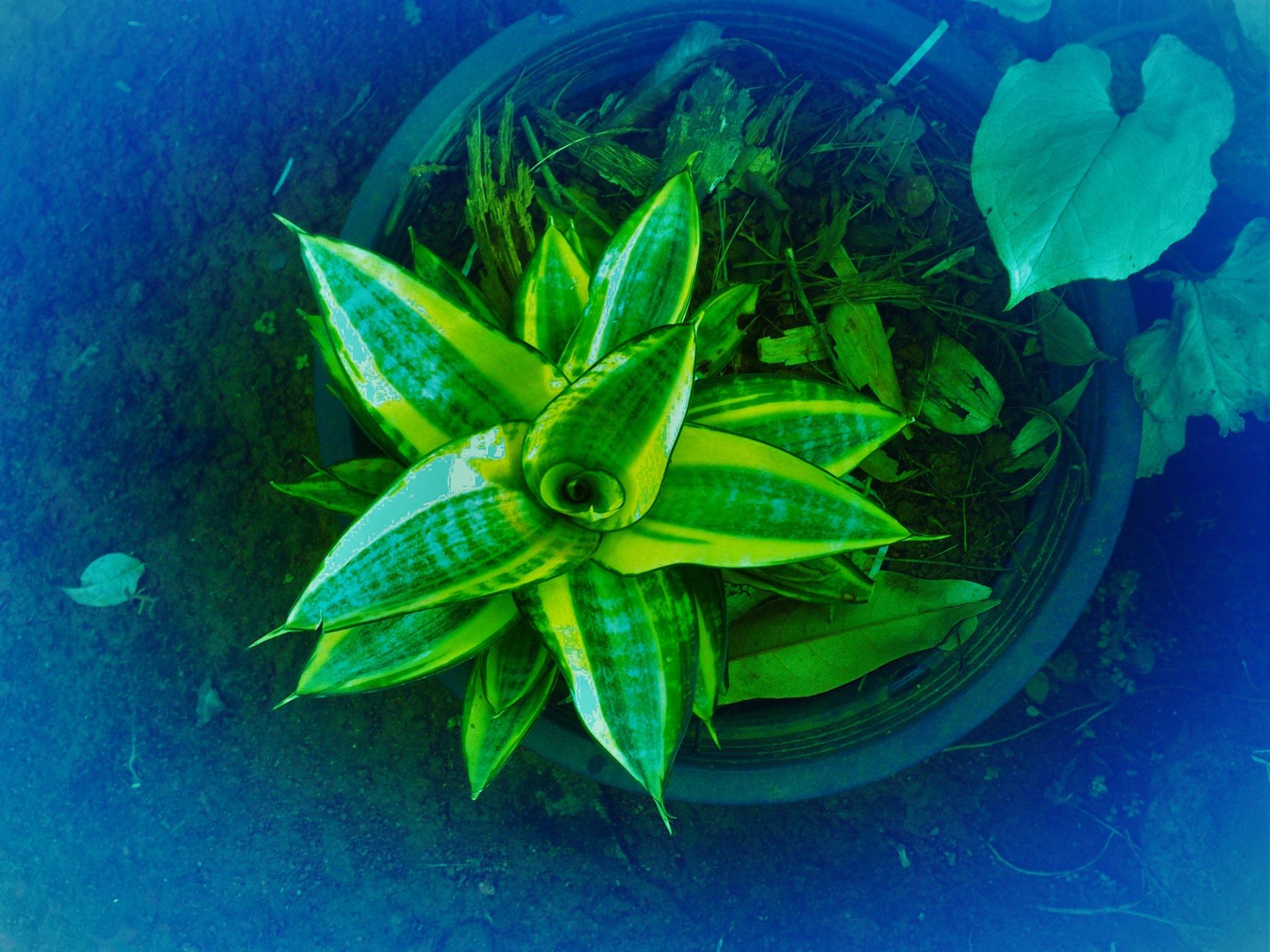 A Green Plant. by A.Samathasena