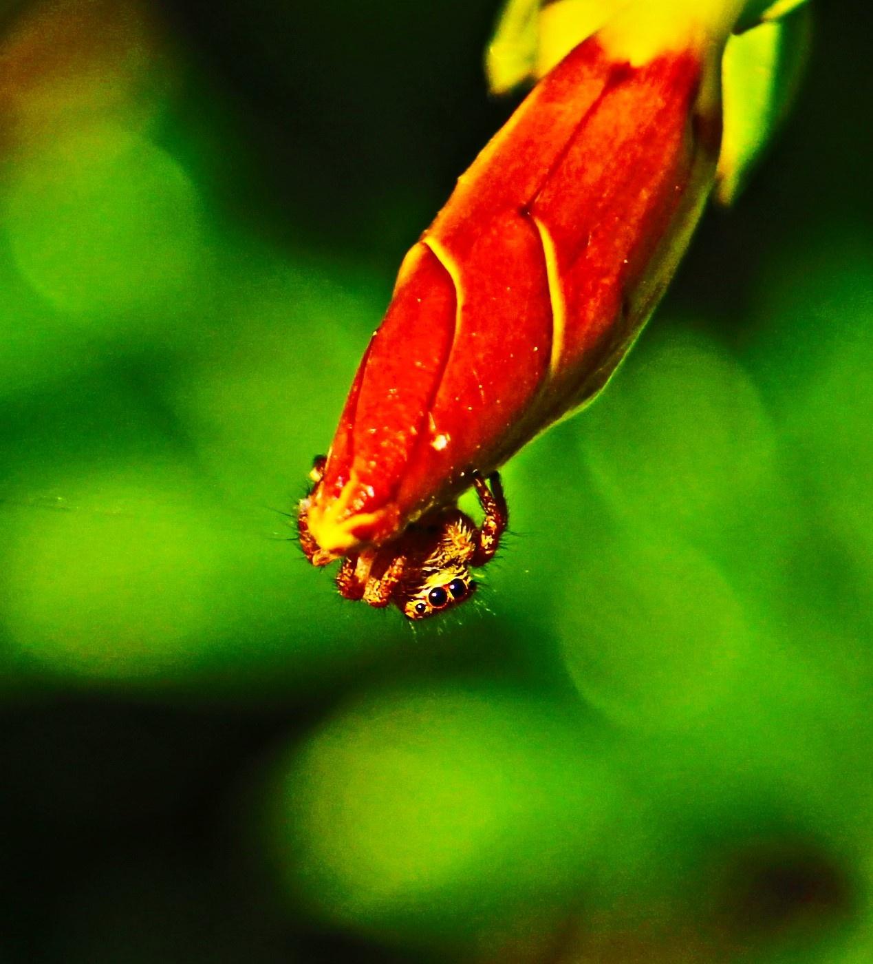 Baby Spider  by A.Samathasena