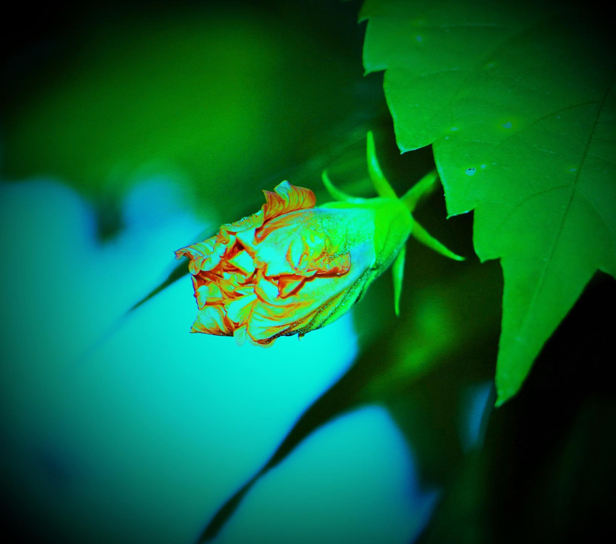 Flower Bud. by A.Samathasena