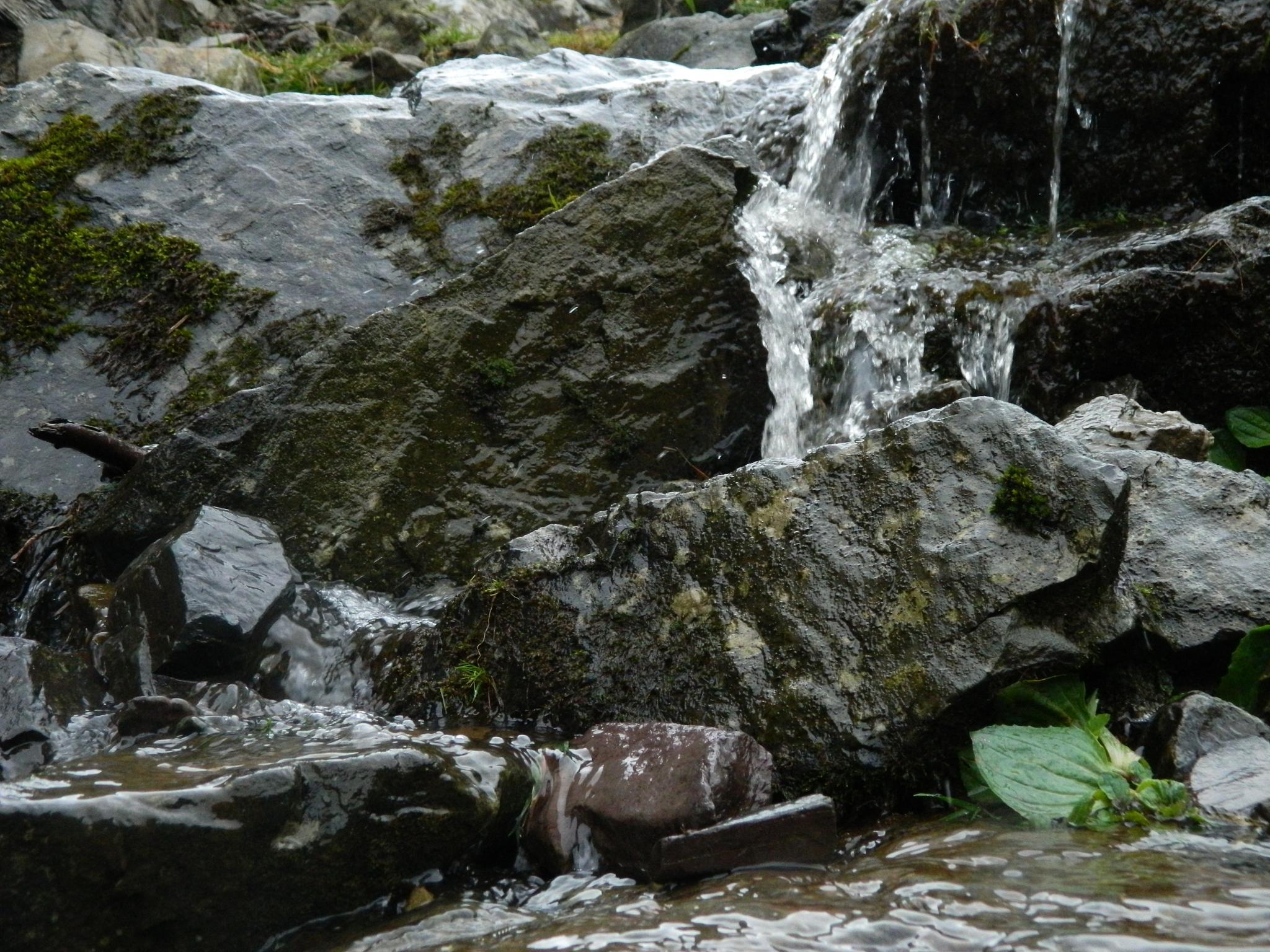 mossy falls by seanwilliams017