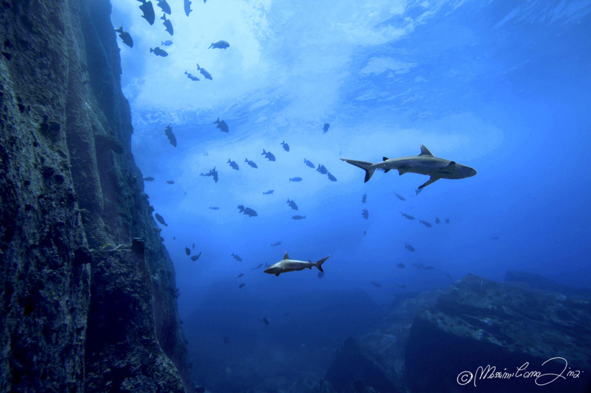 Shark Temple by massimiliano.finzi