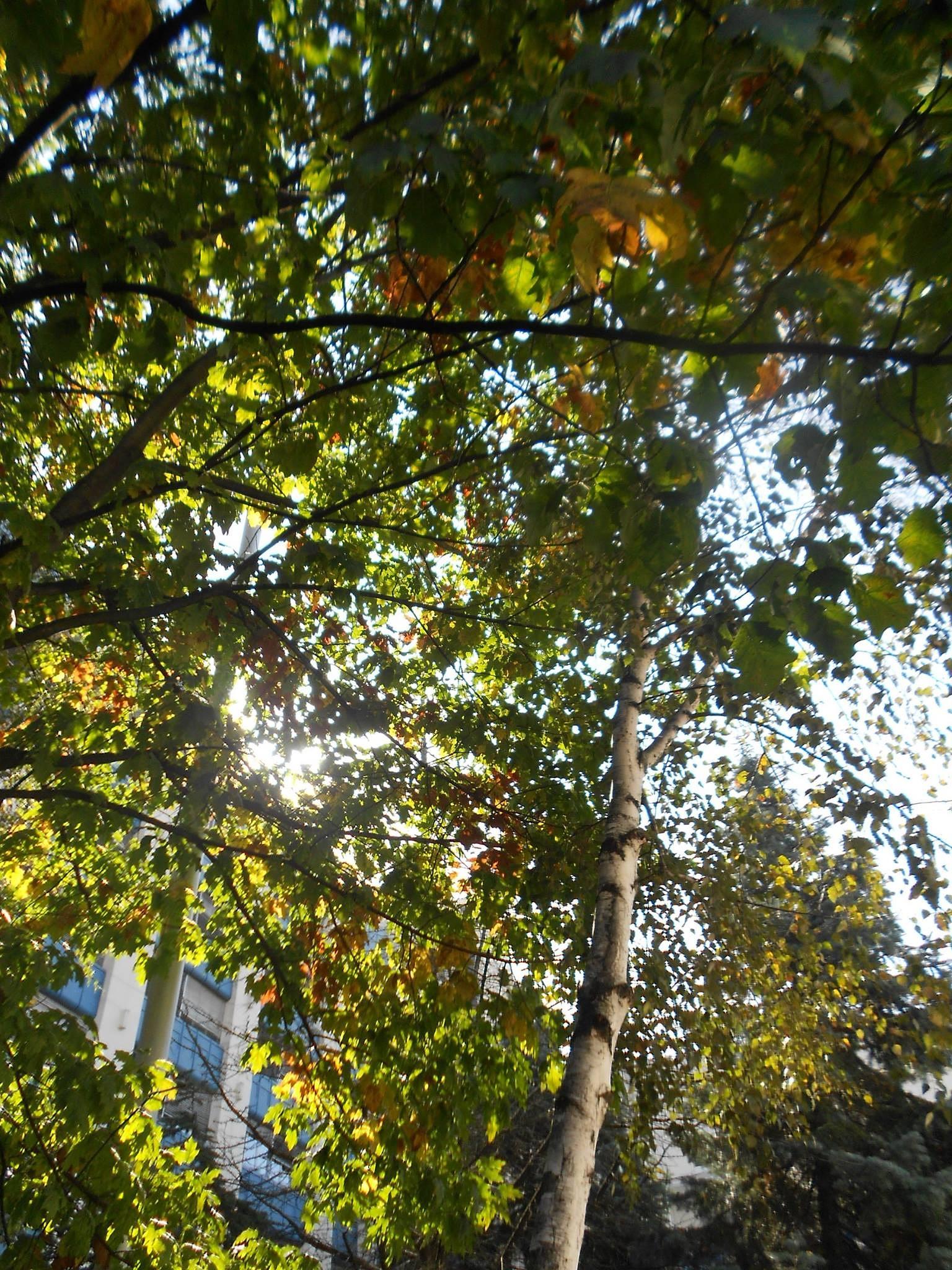 Jesen  by biljanapetrovic1048