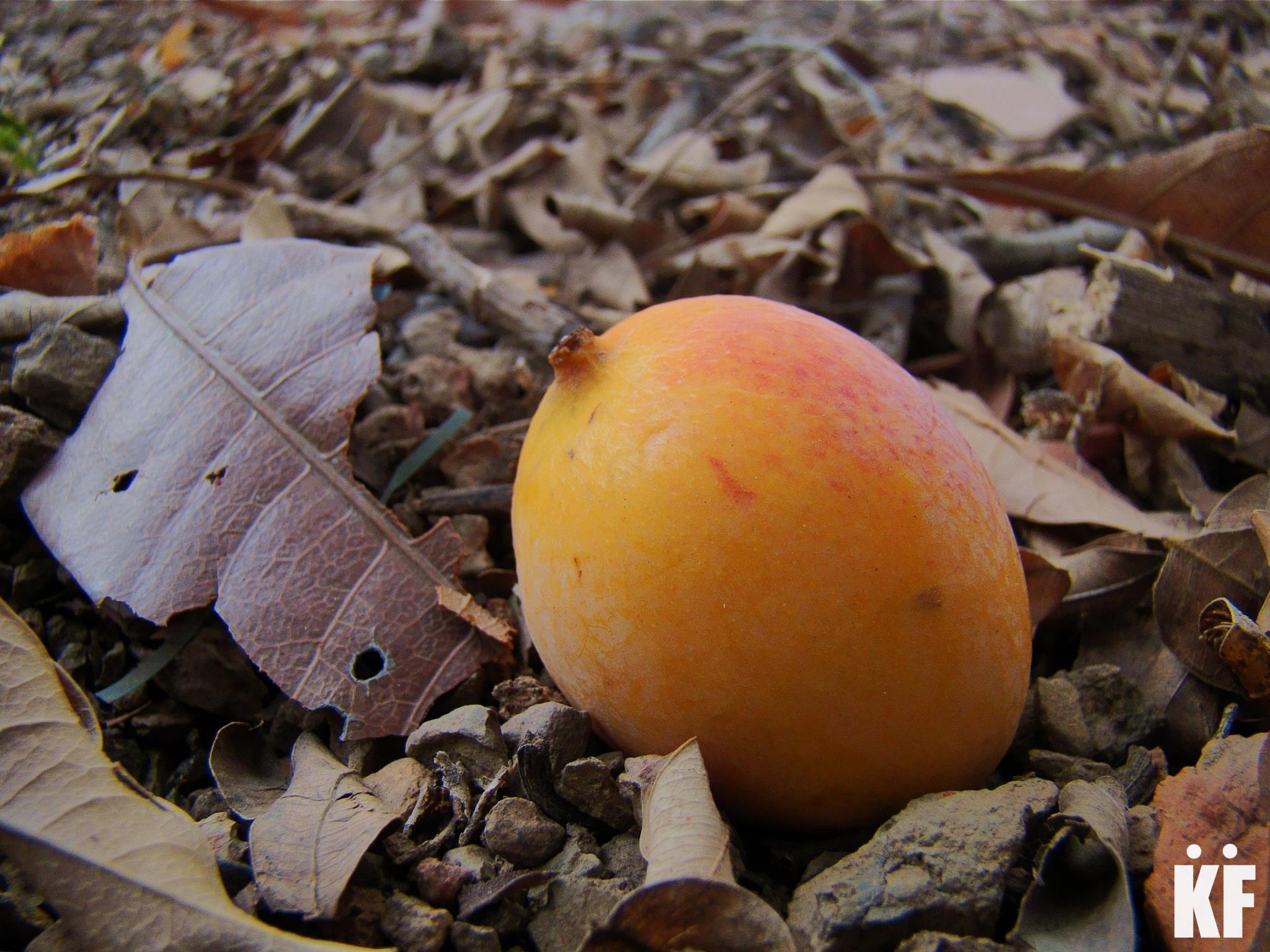 Mango! by Francisco Reyna