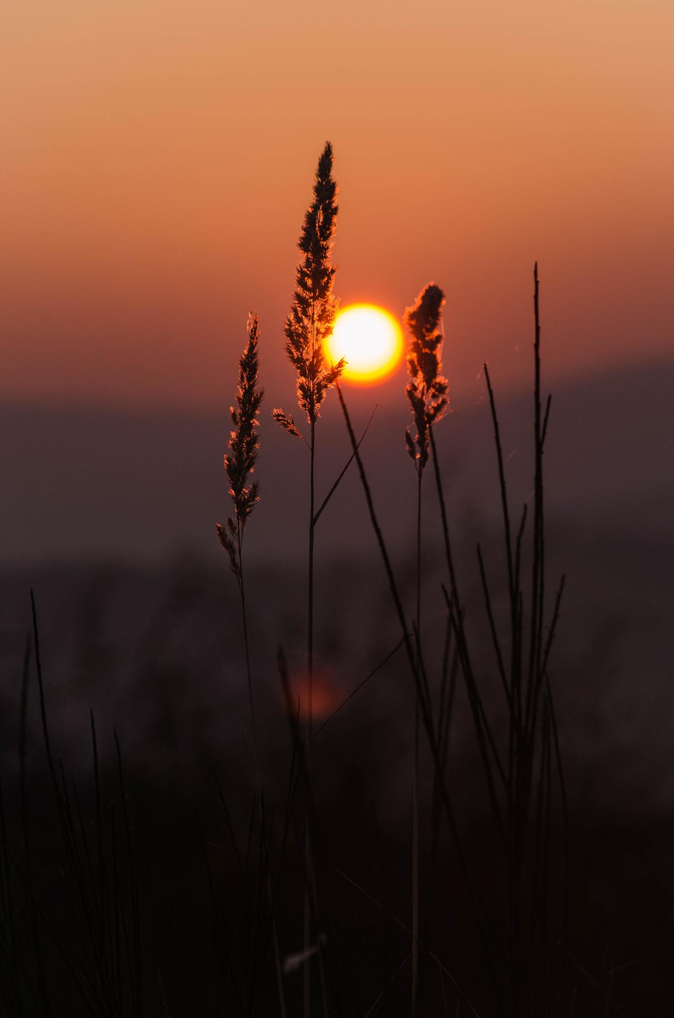 In the sun by SuciuDaniel