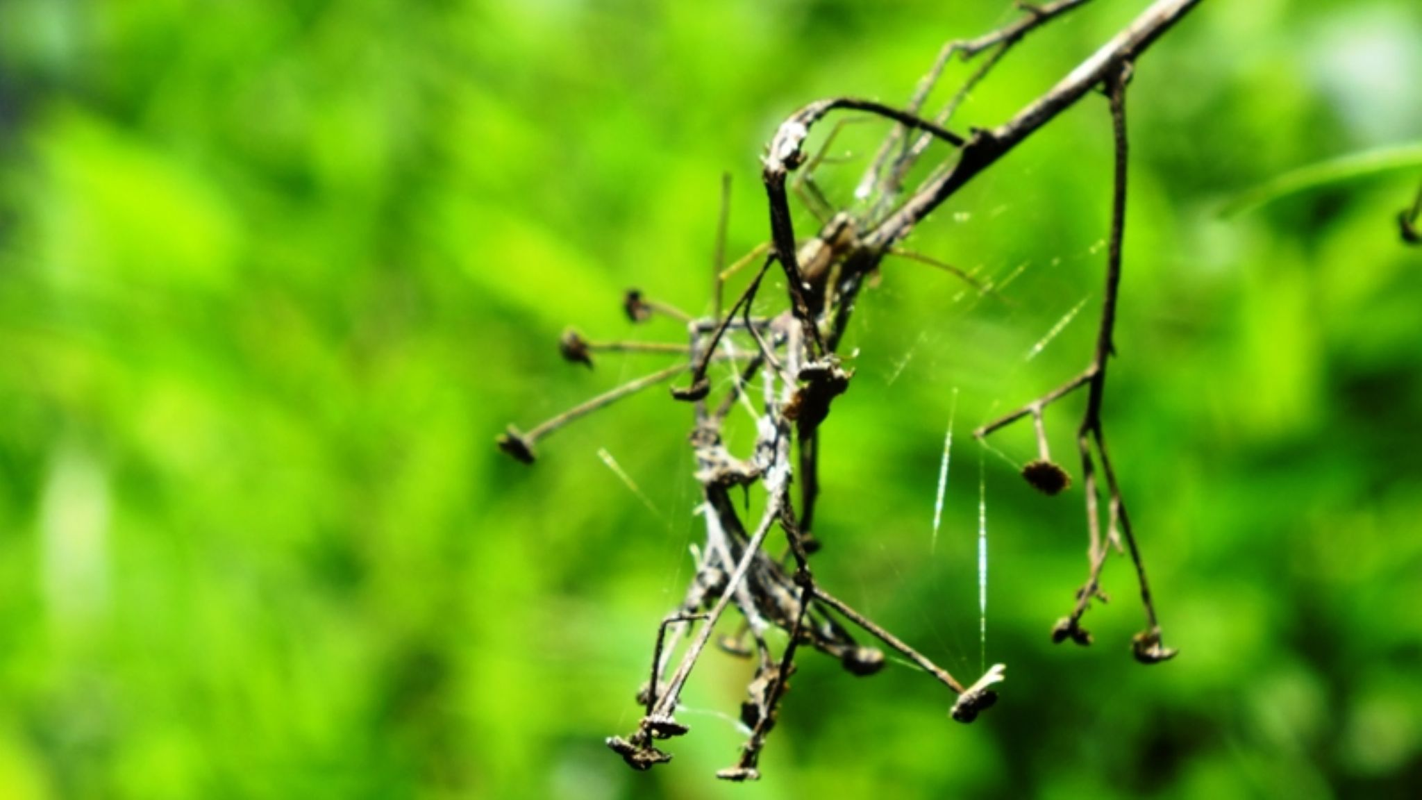 spider on a withered plant. by Jenin