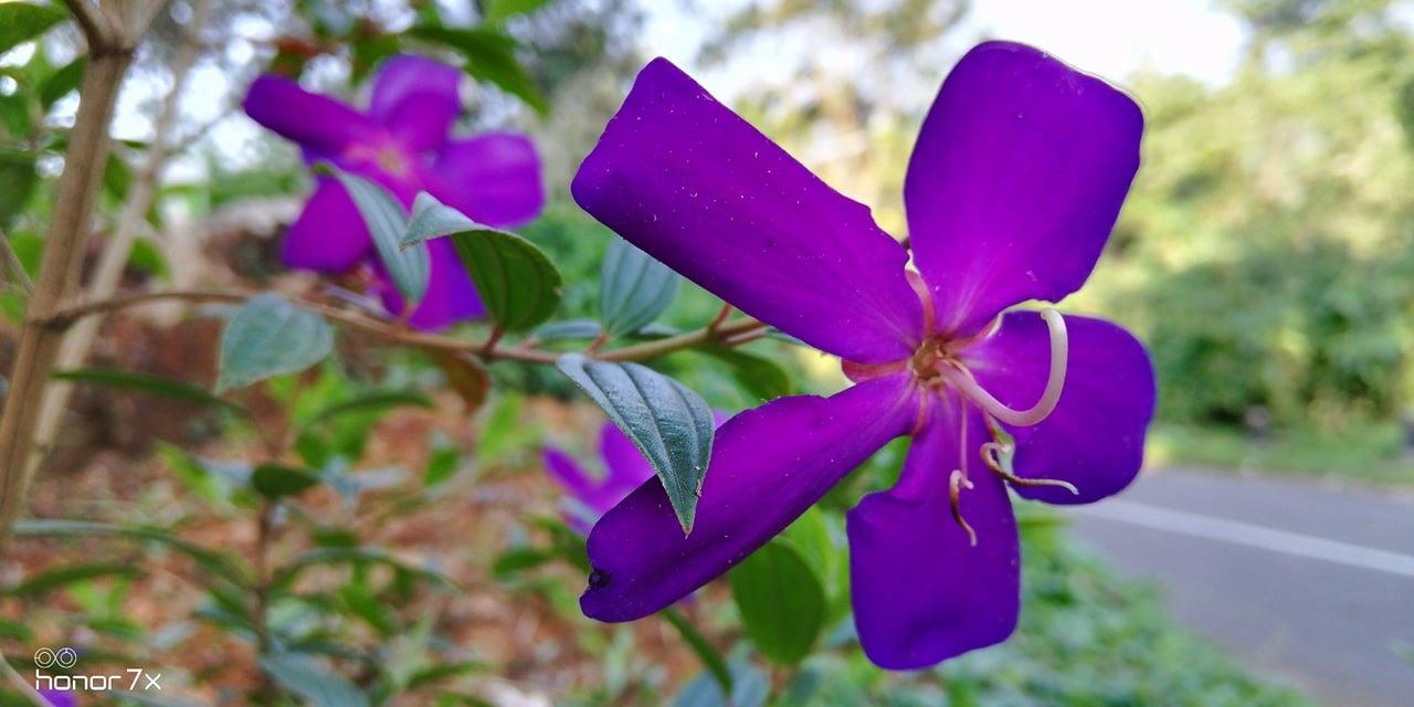 flower by Jenin
