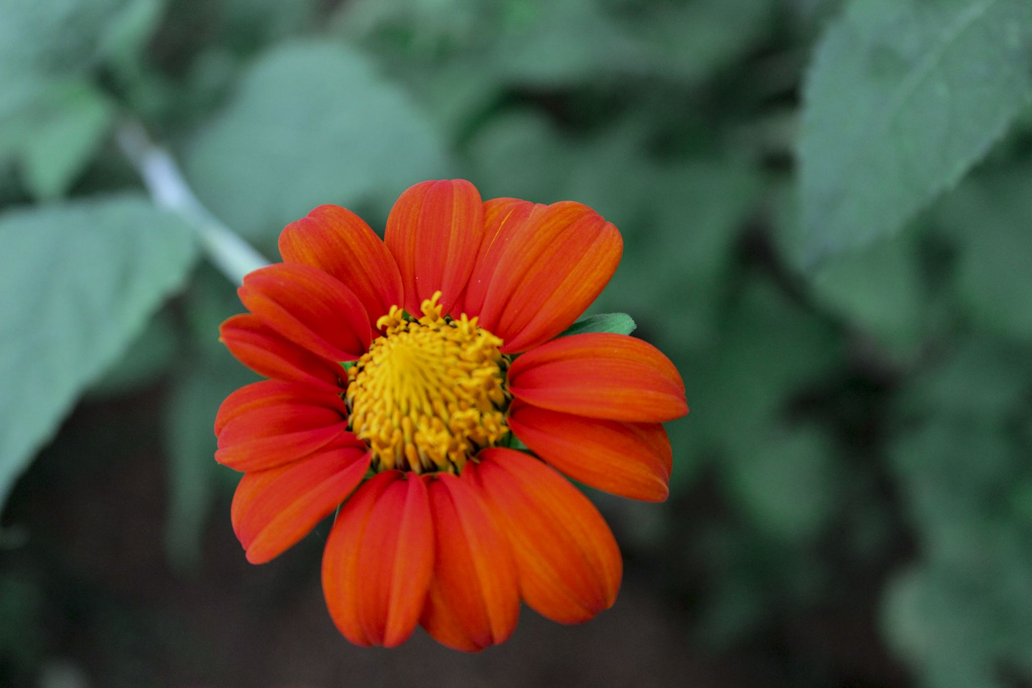 flower 2 by Anand094