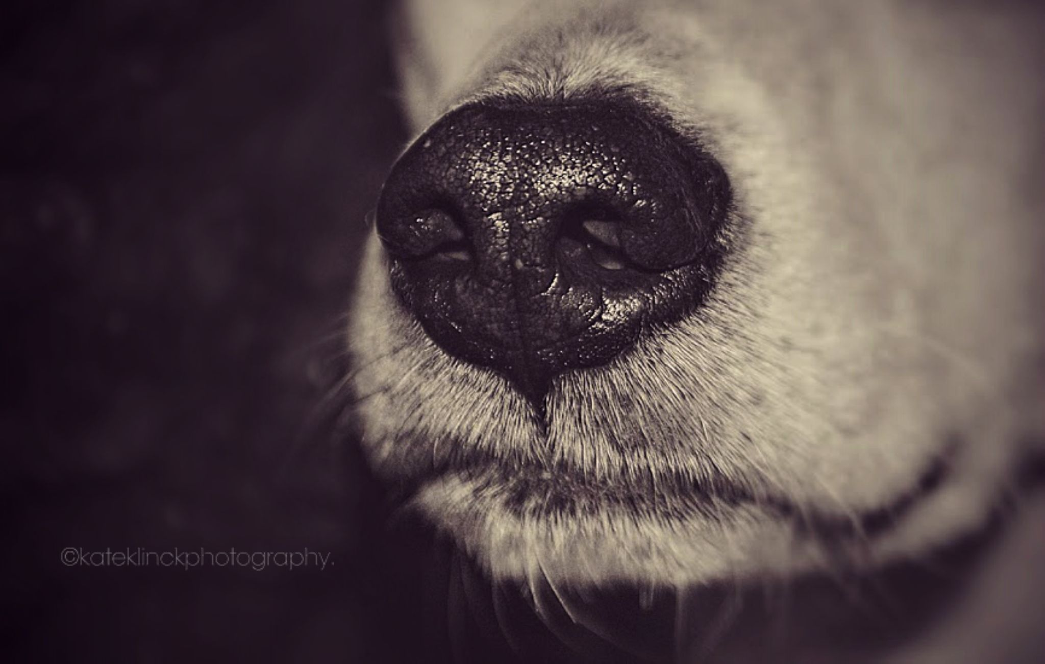 A Very Wet Nose. by katherine.klinck