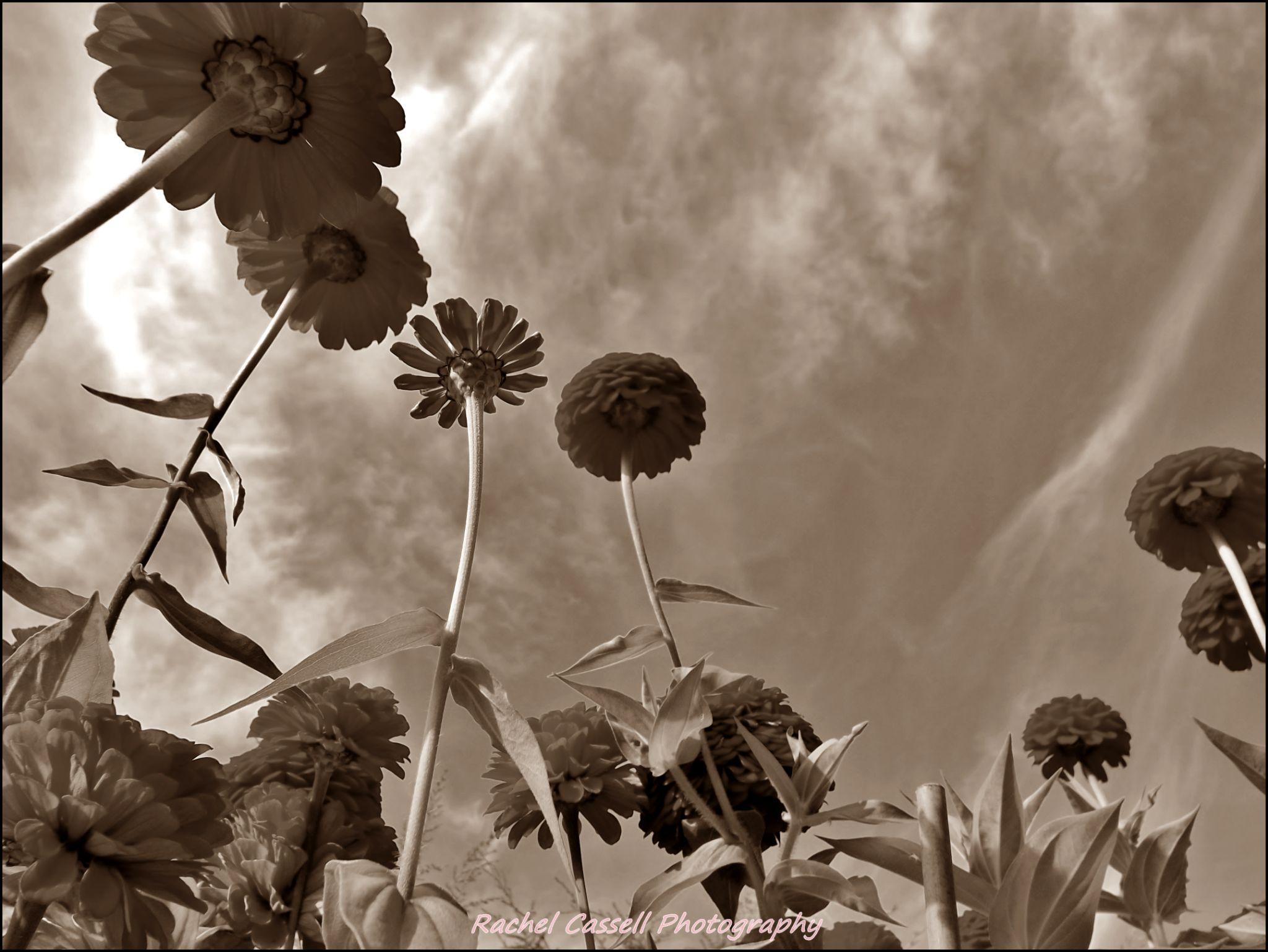 Untitled by rachel.snydstrup
