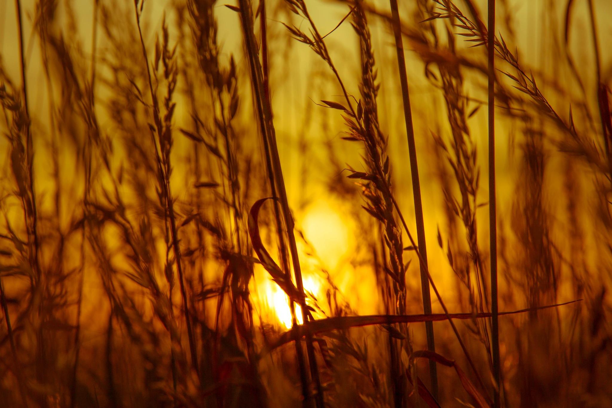 sunset  by MSBerlin