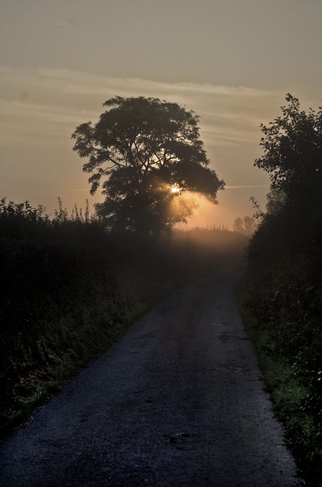 Country Lane Dawn by david.perry.5602