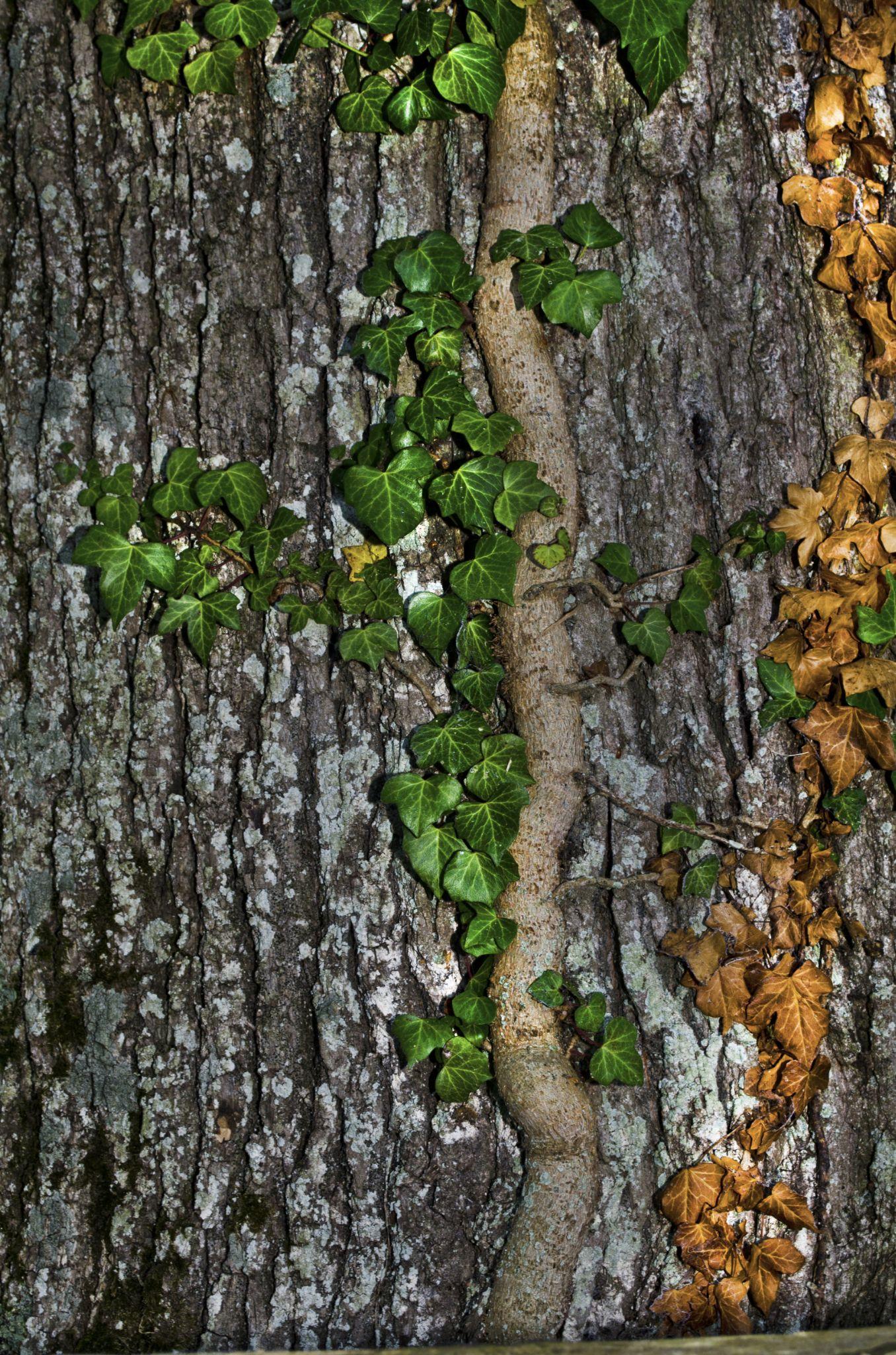 Tree Hugger by david.perry.5602