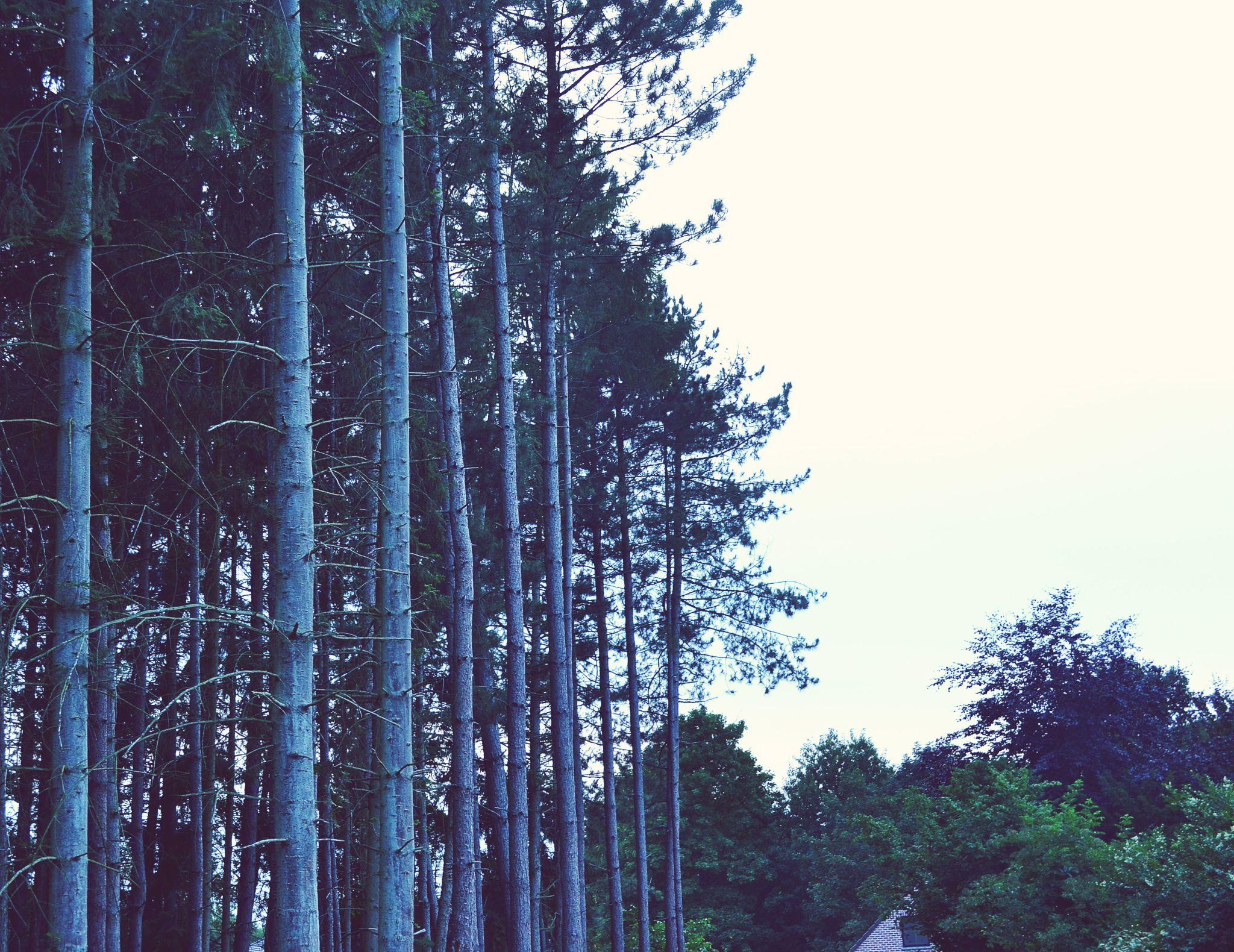 HIGH by kilien.natens