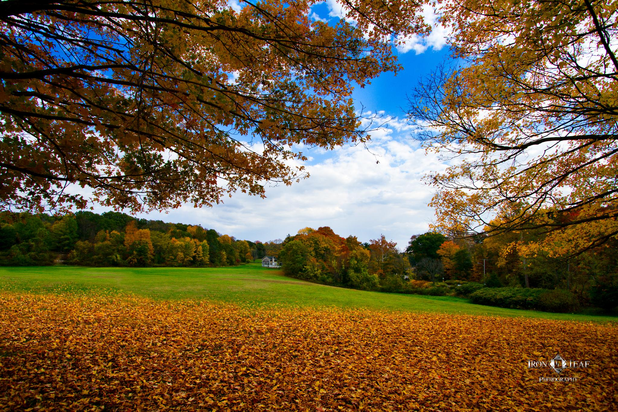 Photo in Landscape #landscape #fall #trees #nature #leaves #red #orange #green #blue sky #clouds