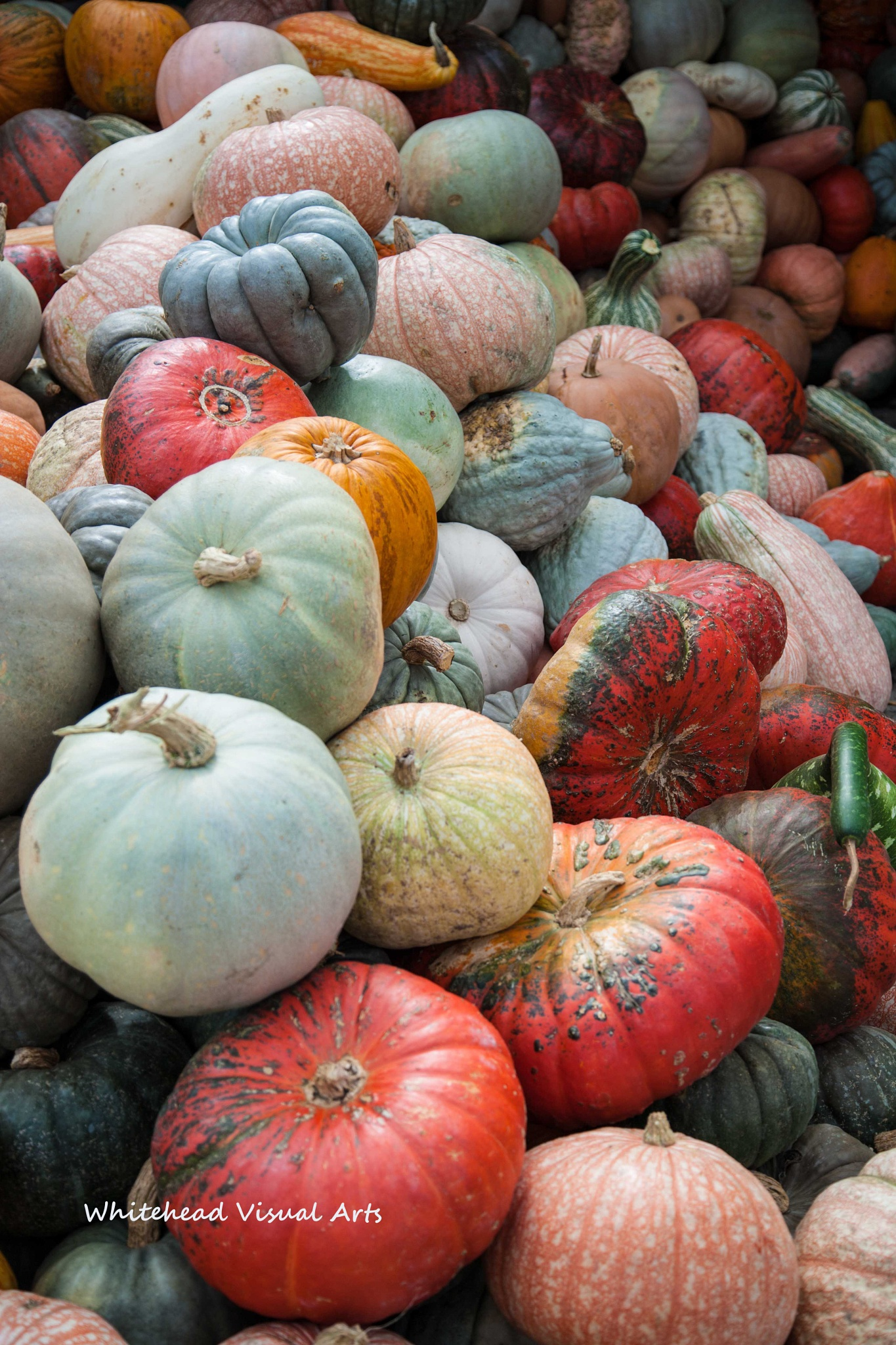Gourds At Market by vincent.whitehead.3