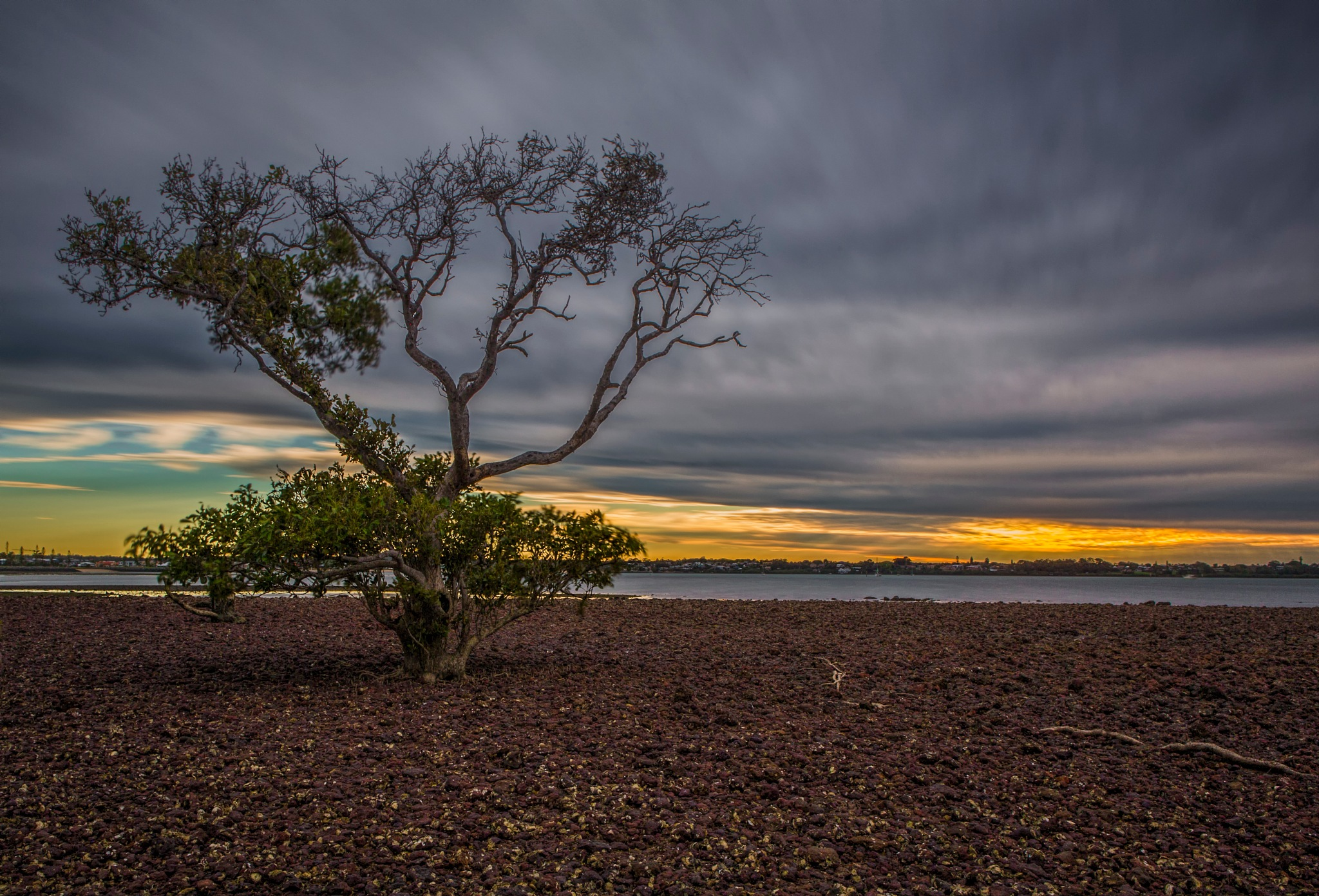 Soul Mangrove by paul.bradbury