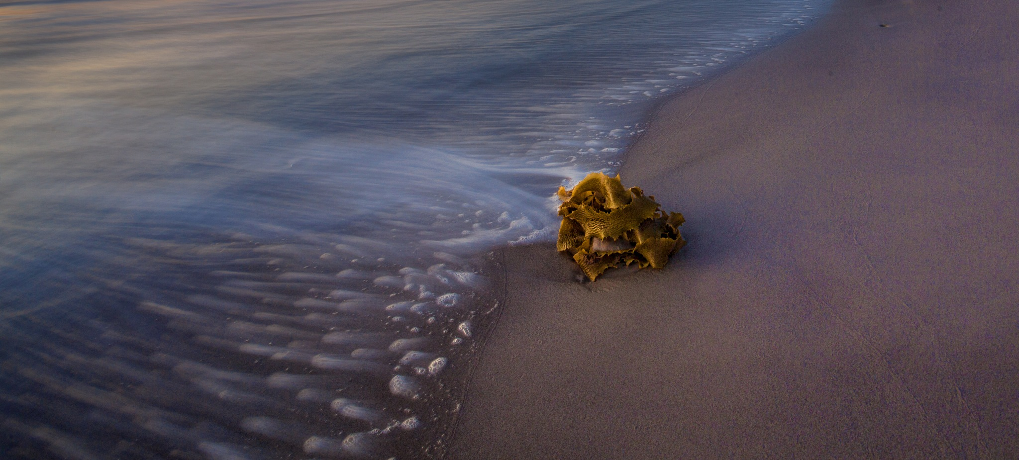 Shore by paul.bradbury