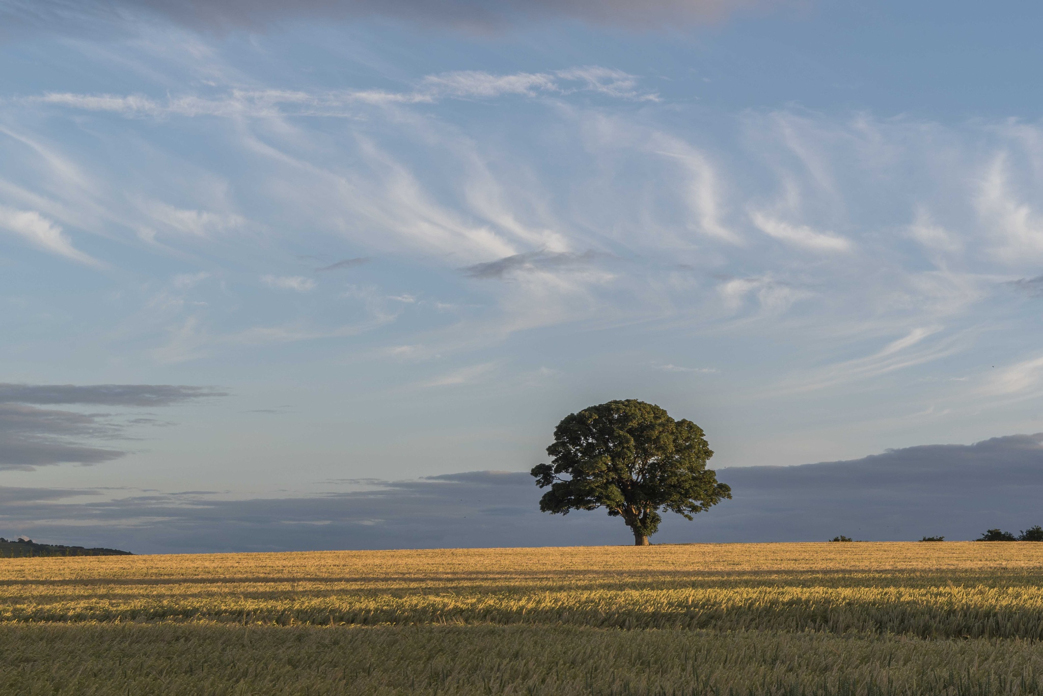 Lone Tree pt2 by Andrew Collins