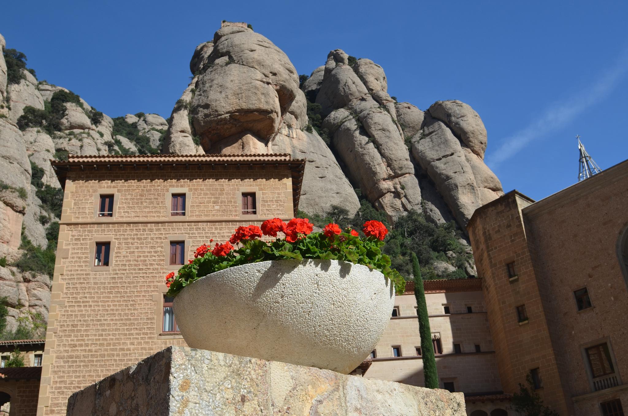 Photo in Landscape #montserrat #mountain #monistrol #abbey #flower #red