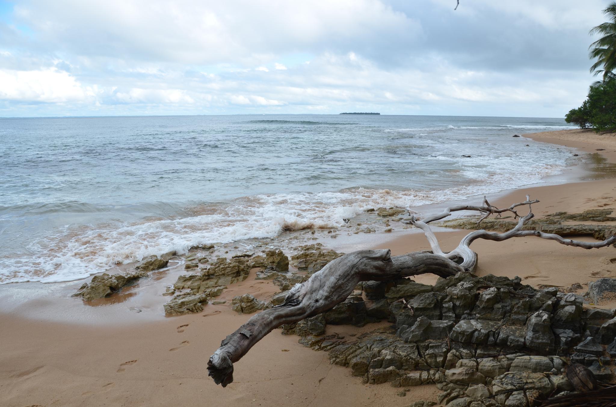 Dead tree, nature of sculpture by ClaudioBezerra