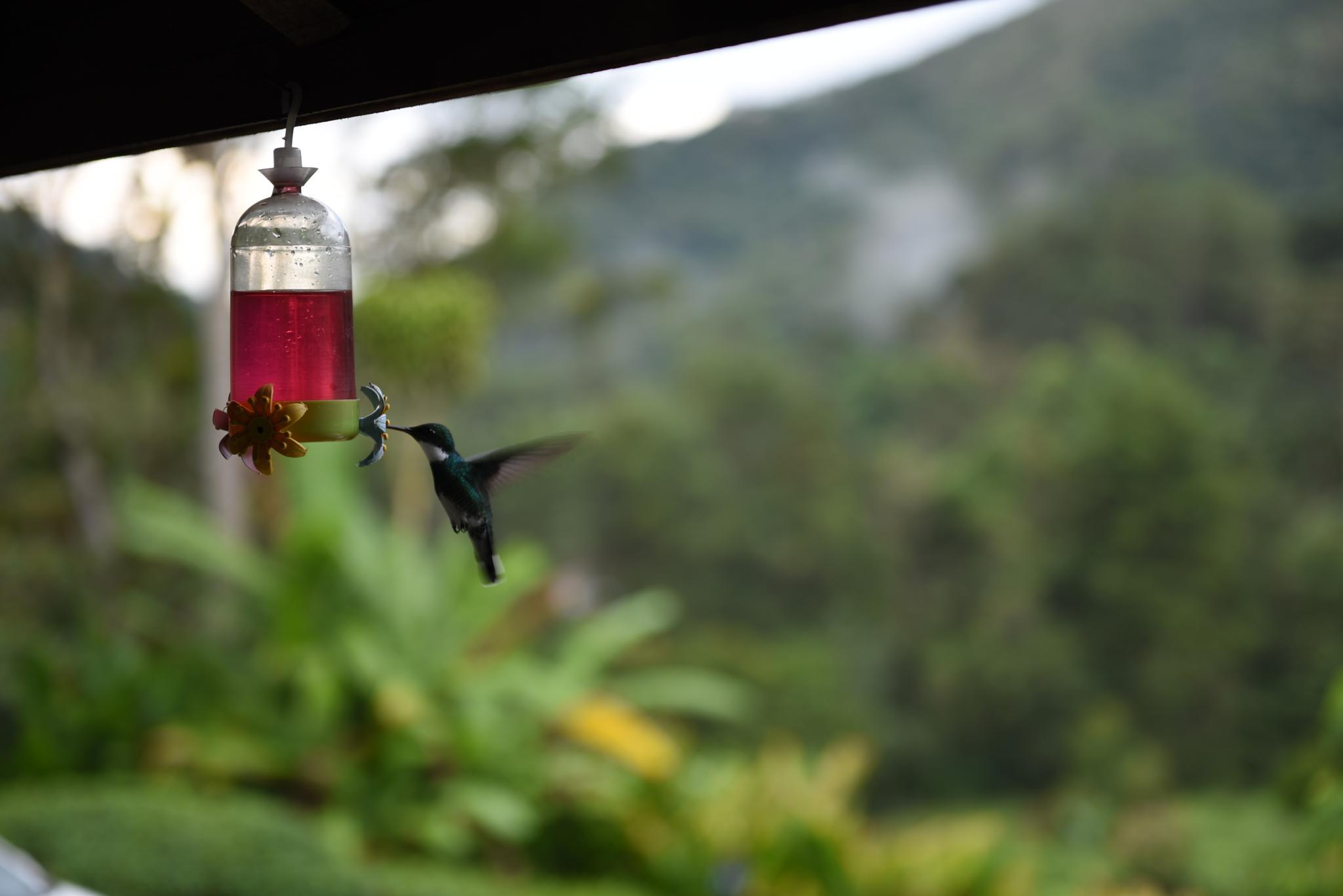 Hummingbird by ClaudioBezerra