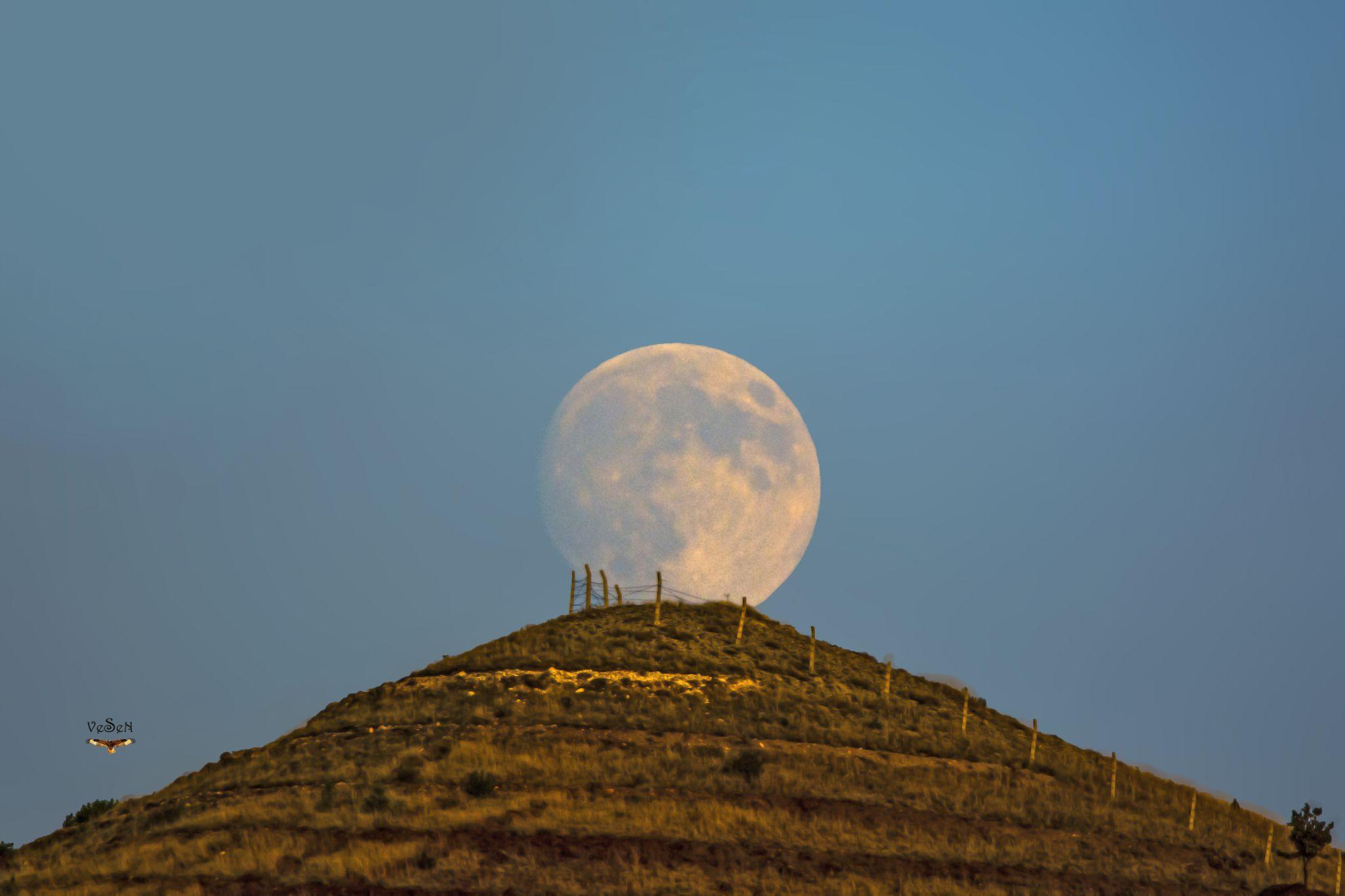 moon by vedat esen