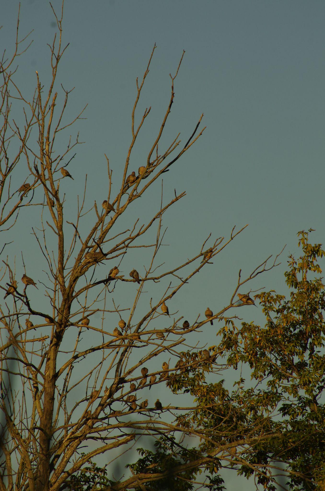 Birds tree by Fernanda Caleffi Barbetta