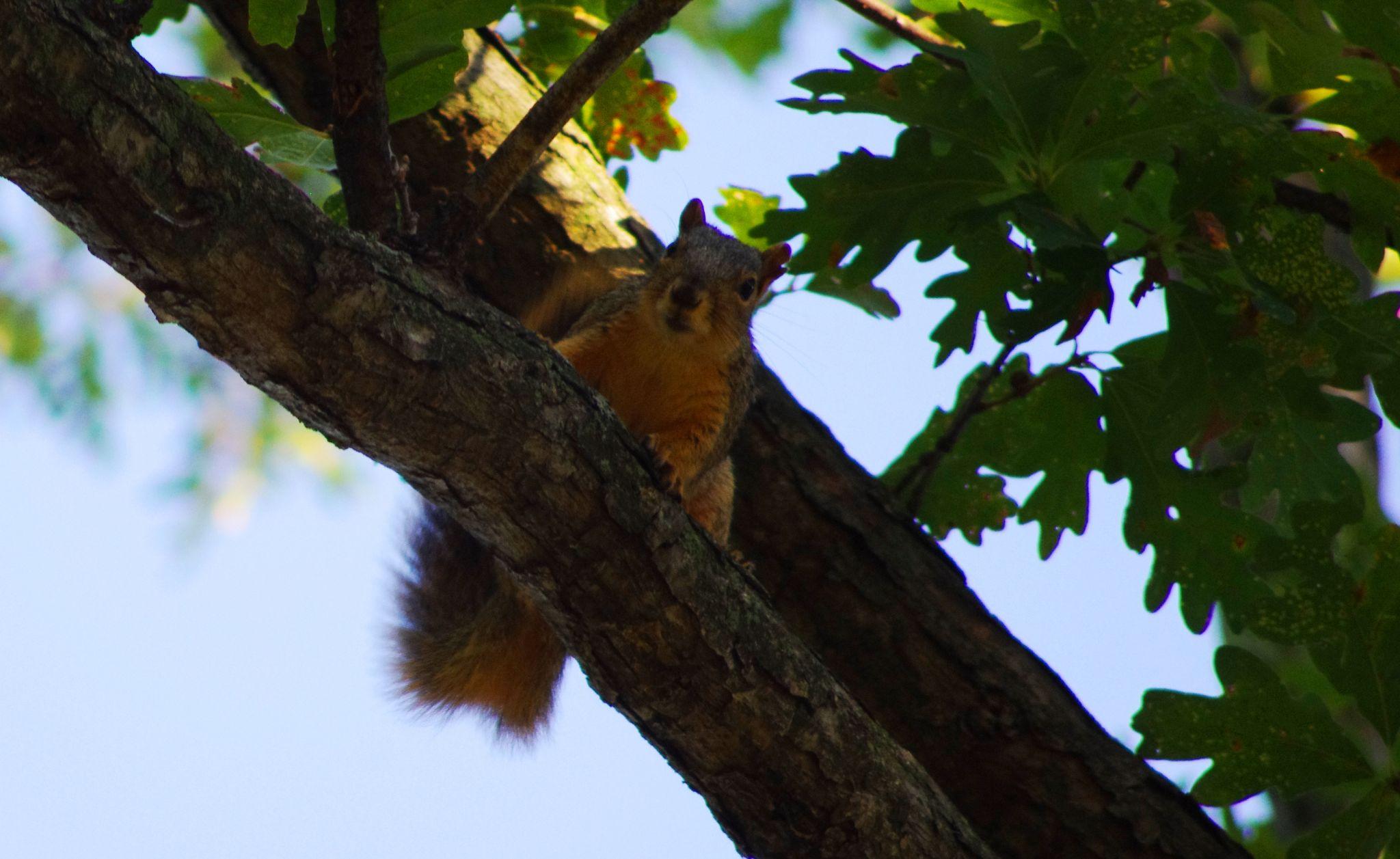 Cute squirrel by Fernanda Caleffi Barbetta