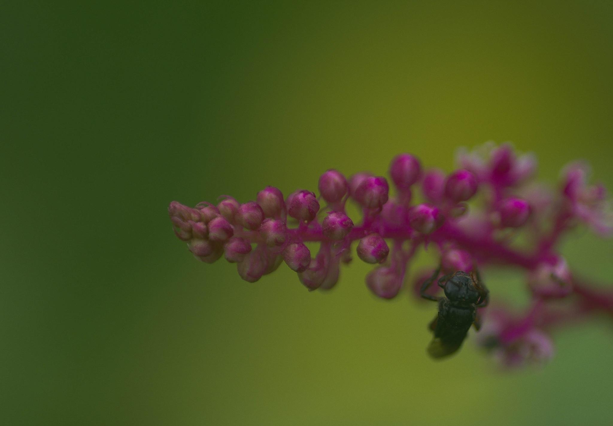 A bug in my flower by Fernanda Caleffi Barbetta