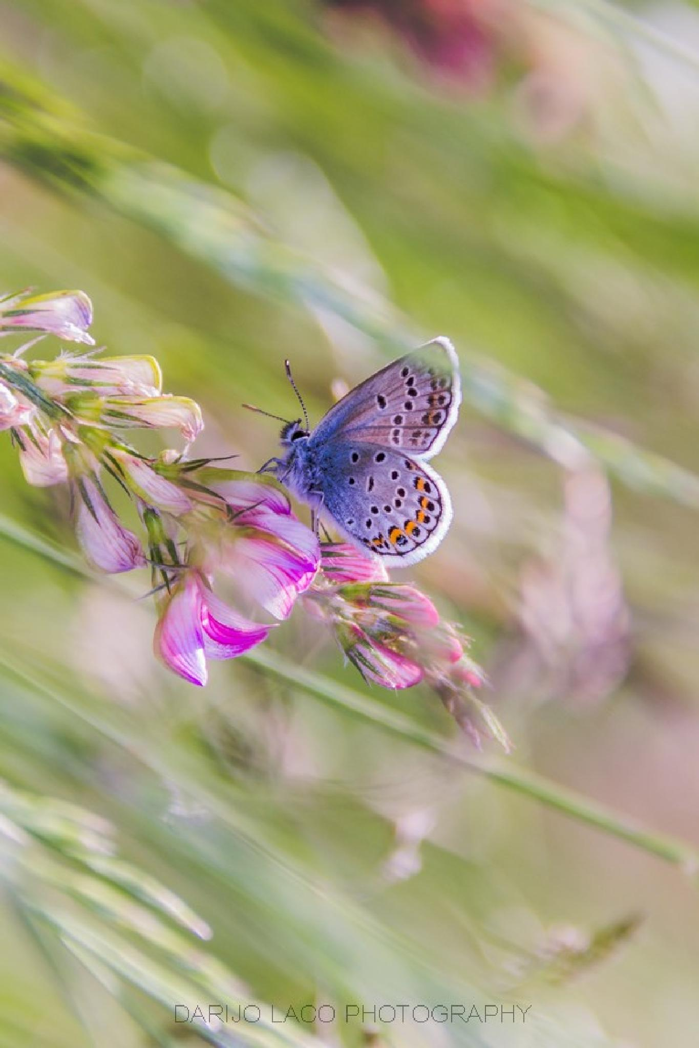 Photo in Animal #butterfly #insect #animal #wildlife #nature #closeup #summer