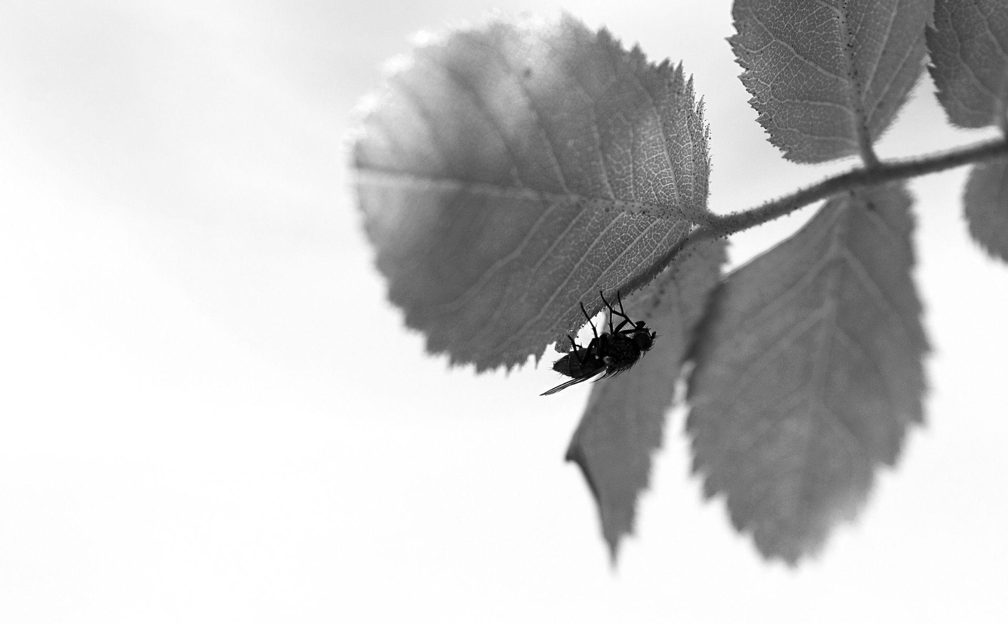 Finding shelter..! by sveinerik.bakken.14
