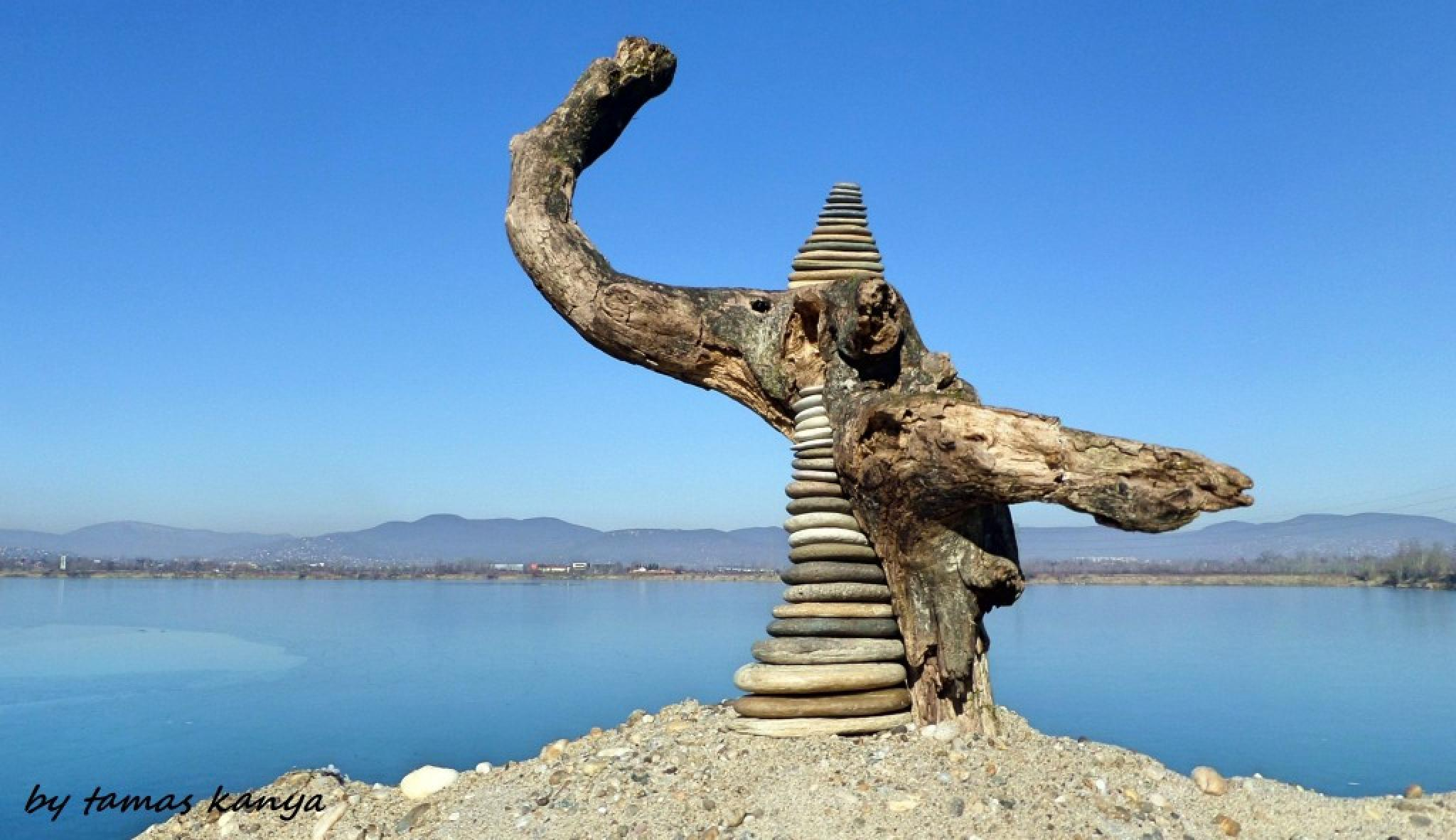 Driftwood art in Hungary by tamas kanya by Tamas Kanya
