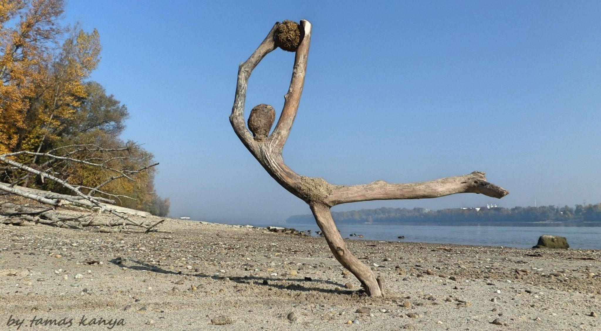 Driftwood art from Hungary by Tamas Kanya by Tamas Kanya