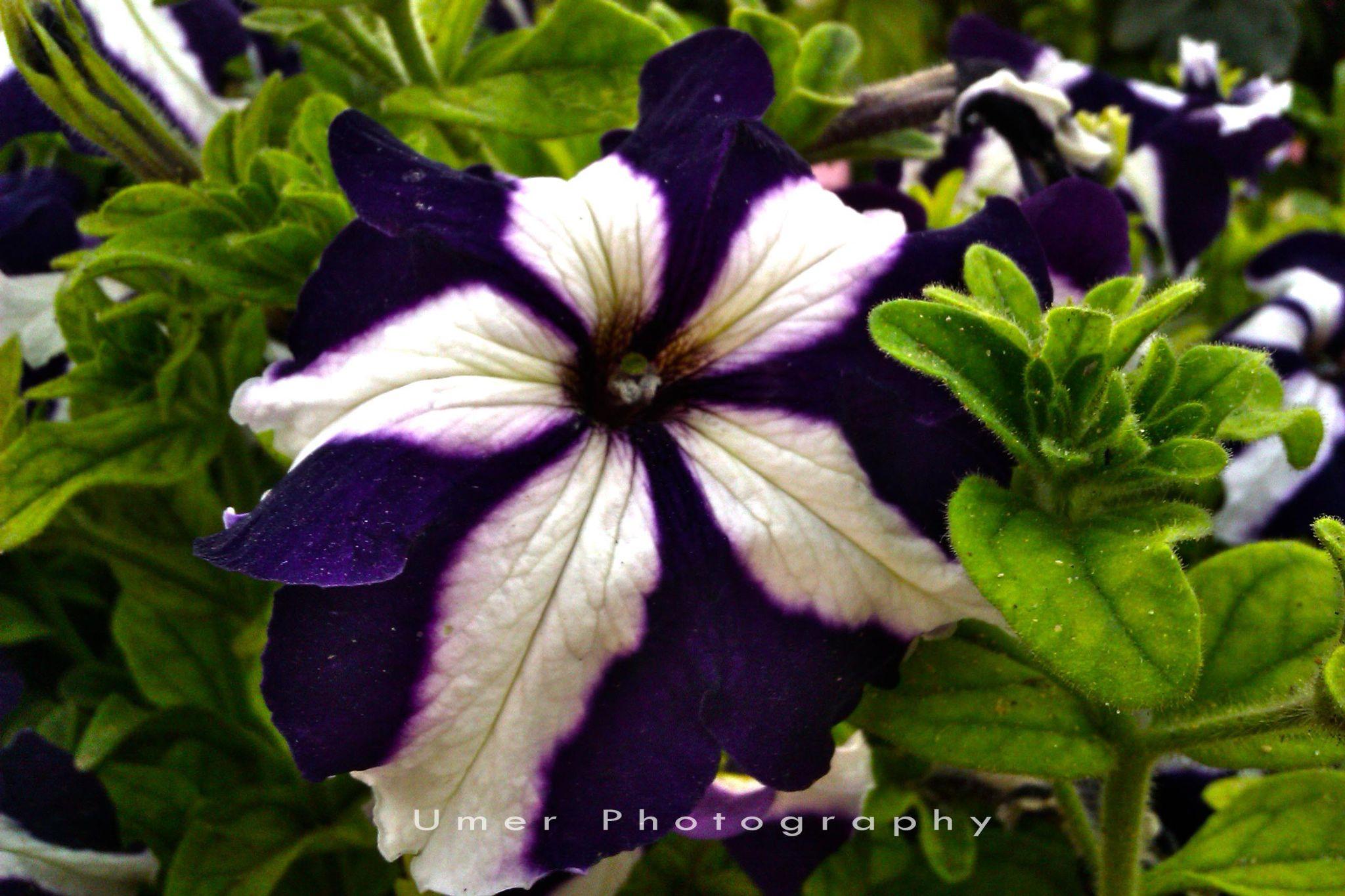 Flower by mohammad.umer.161