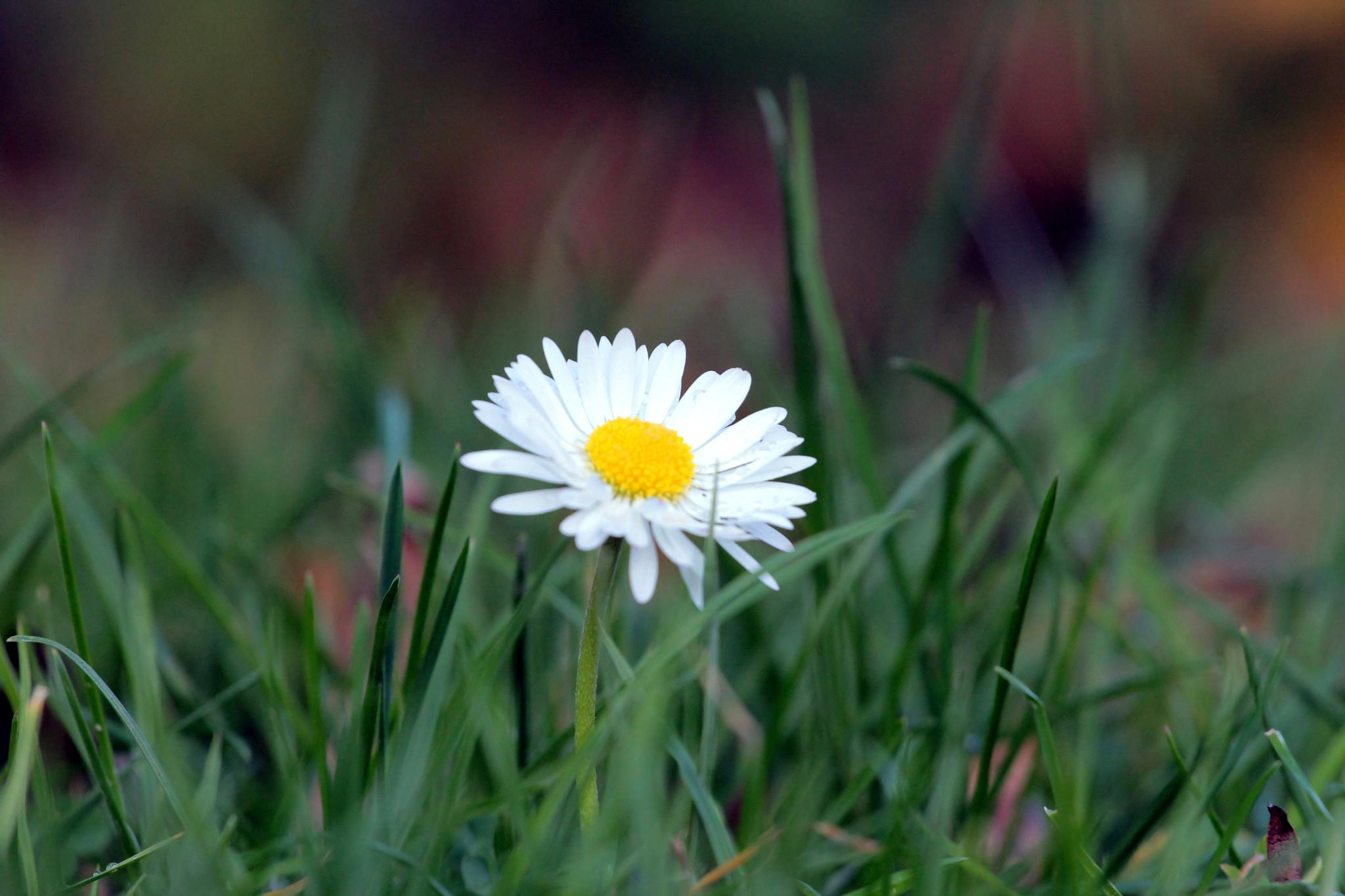 macro world in grass by Stanislaw Bomba
